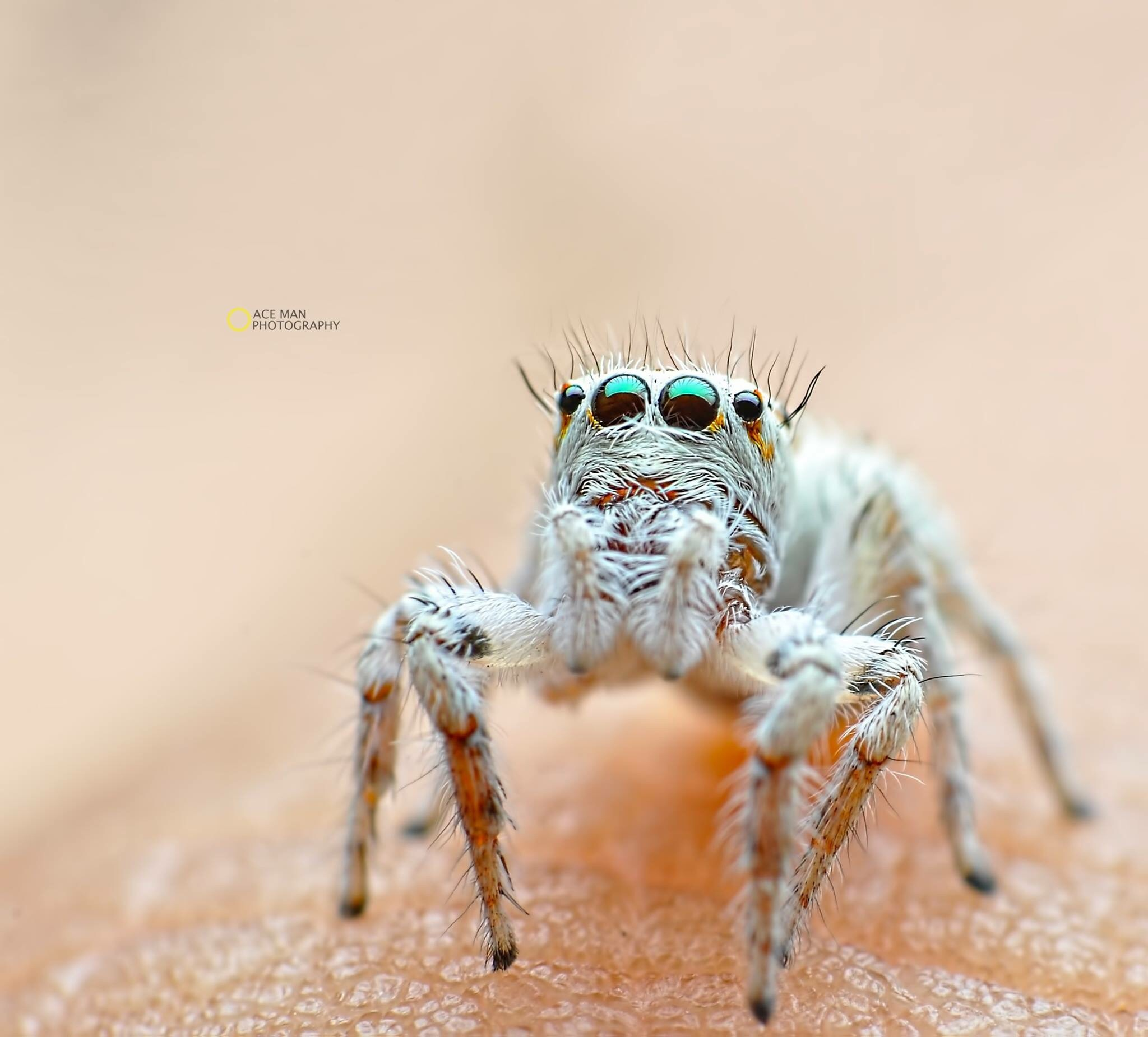 Spider look !  by Ace Man