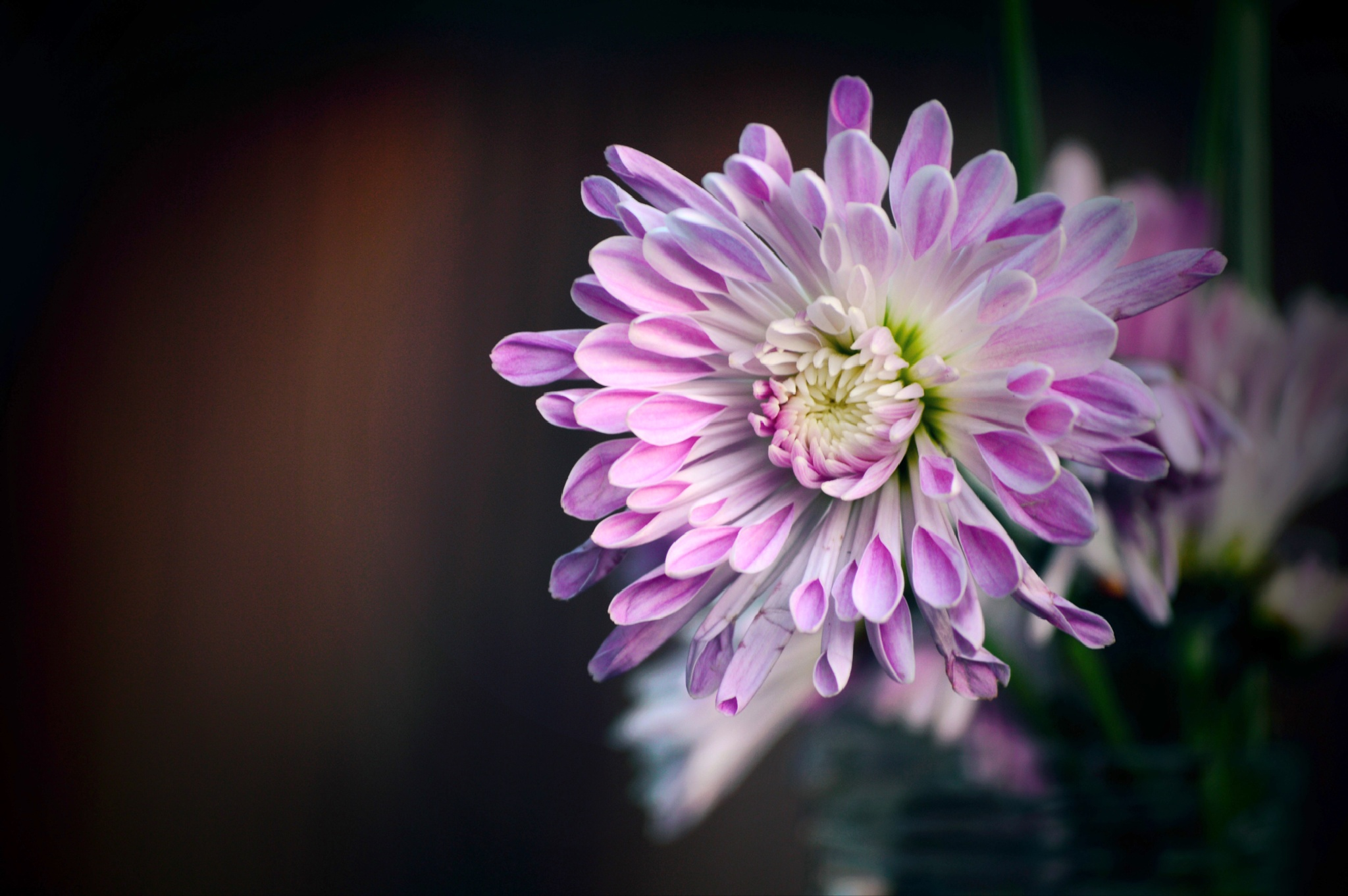 Purple Flower by Janet Dalton Photography