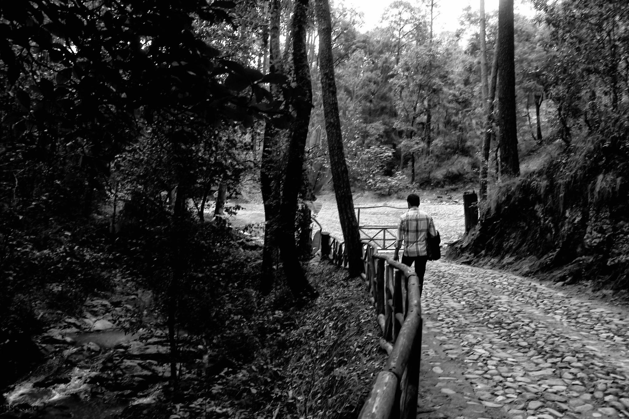 camino by mandira