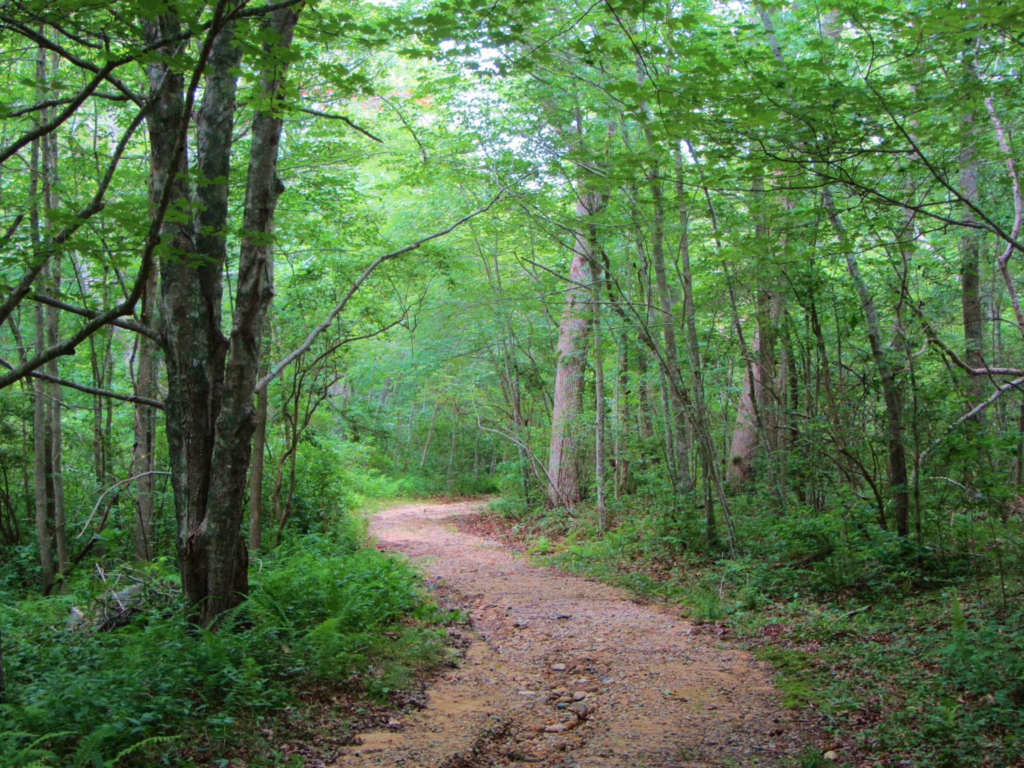 Photo in Nature #martha's vineyard #woods #walking trail #hiking #forest #menemsha