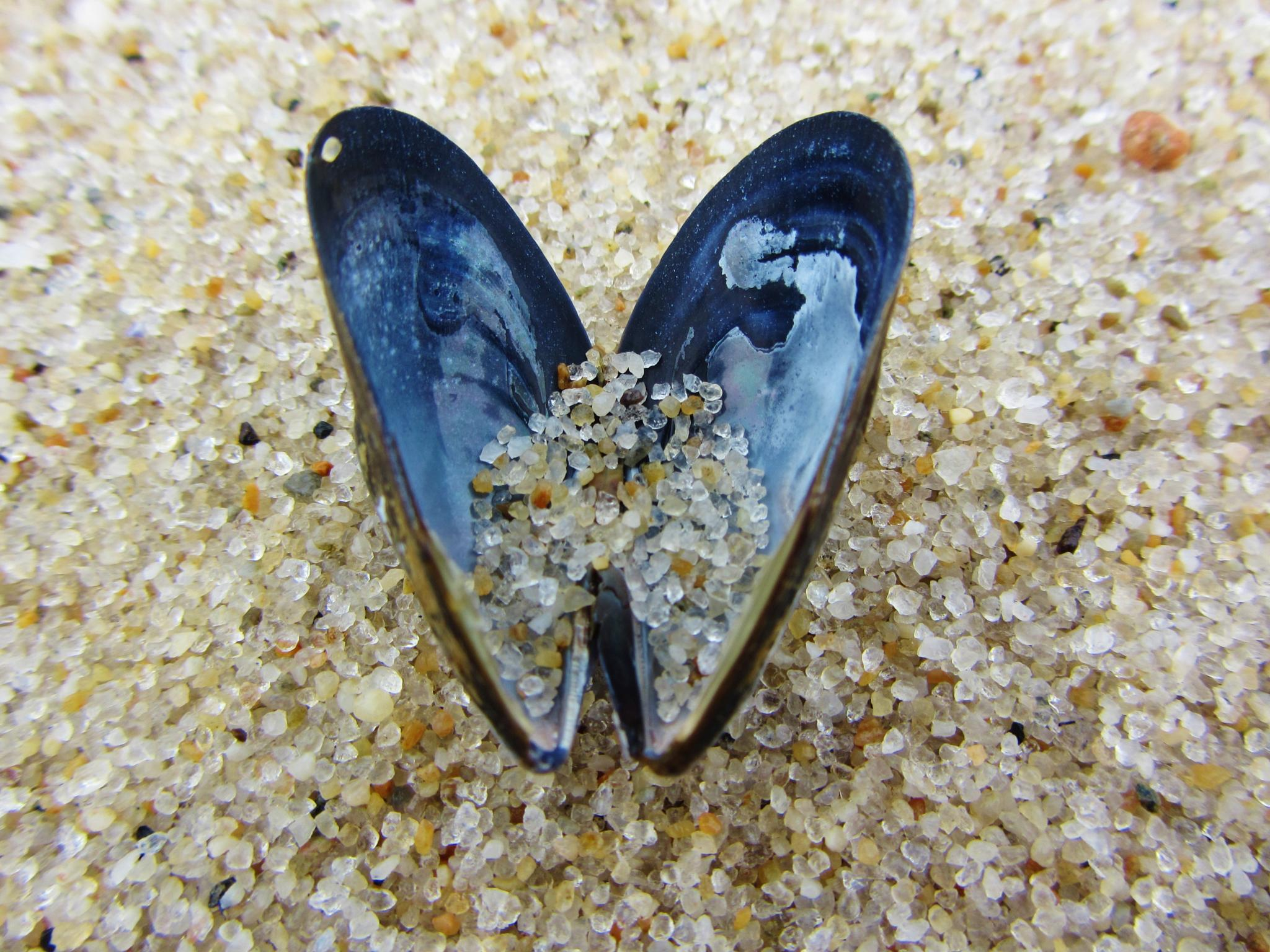 little mussel shell, big sand by Cindy Romero