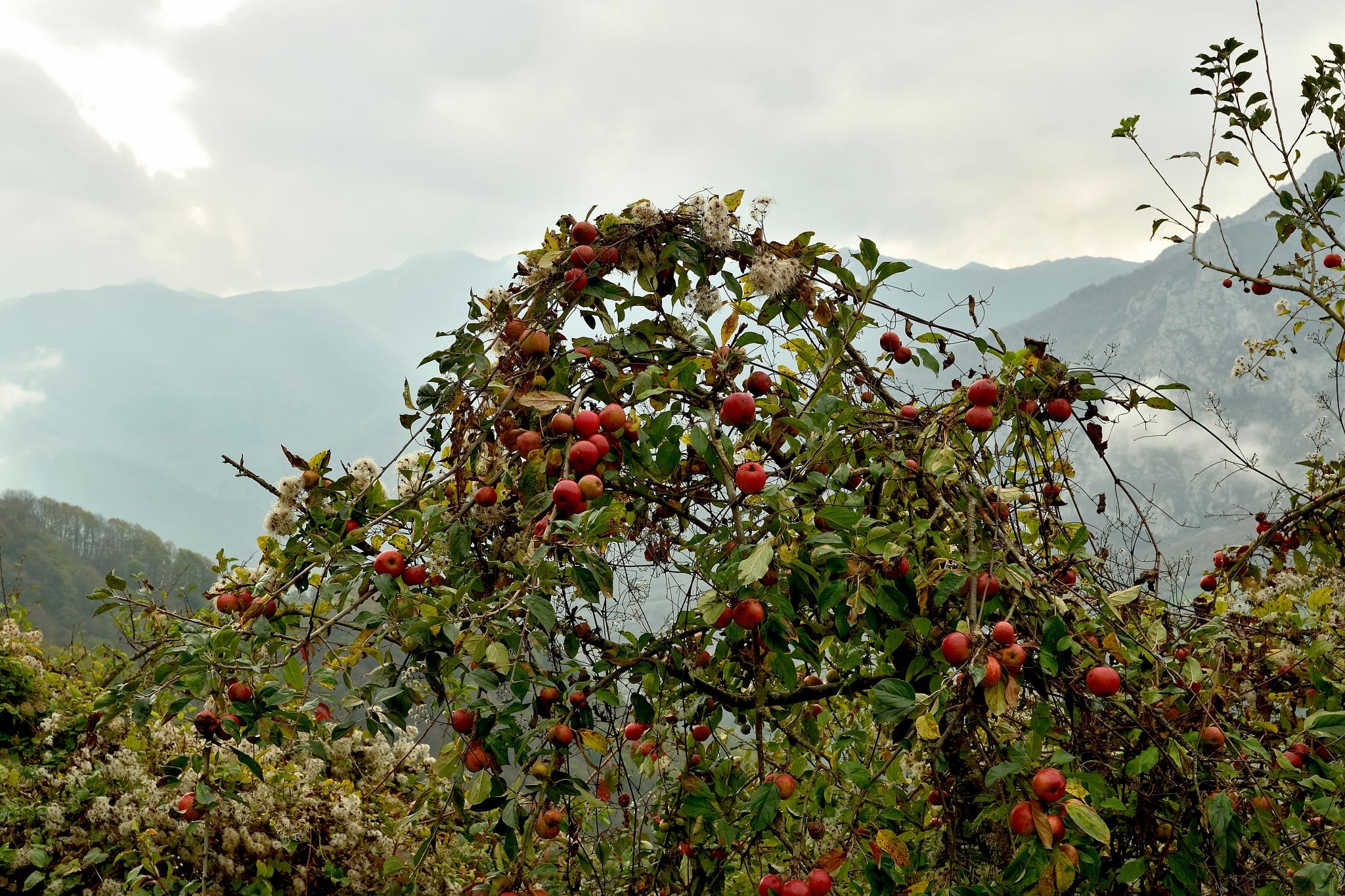 Apples by Xurde González Uría