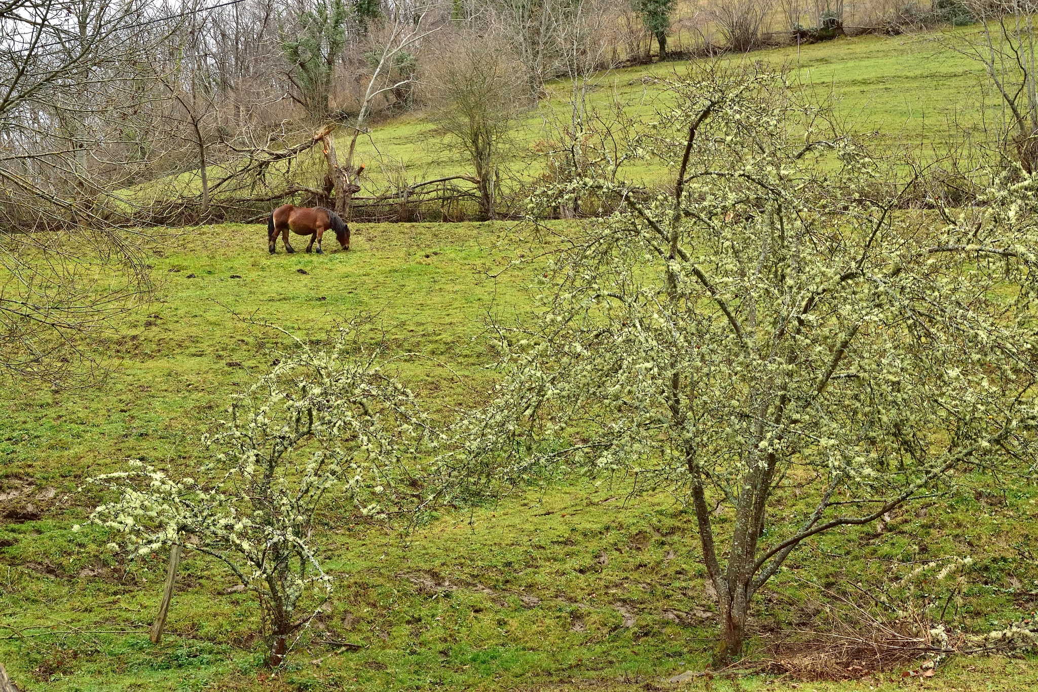 Horse and apple trees in winter by Xurde González Uría