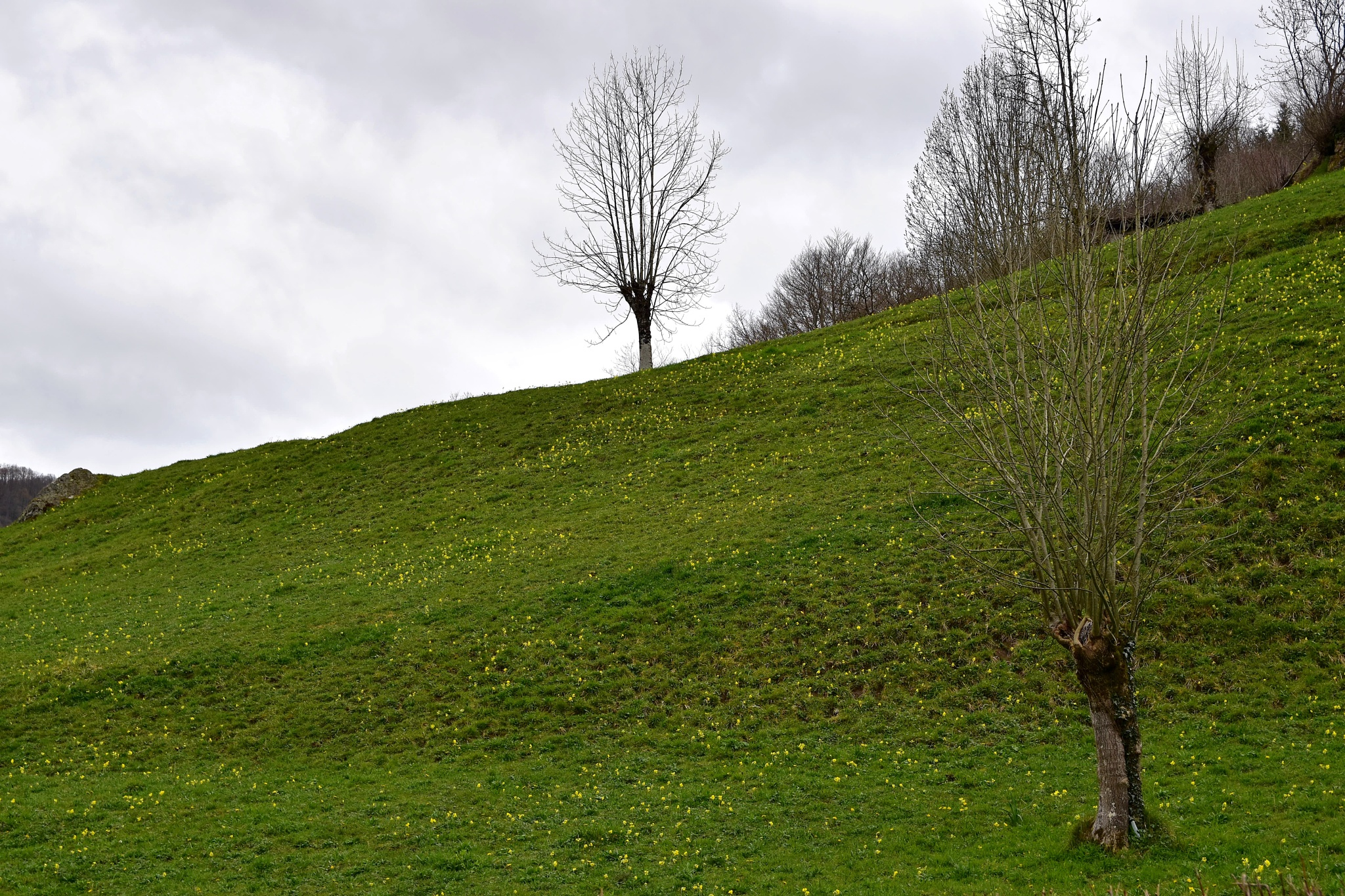 Nude trees by Xurde González Uría