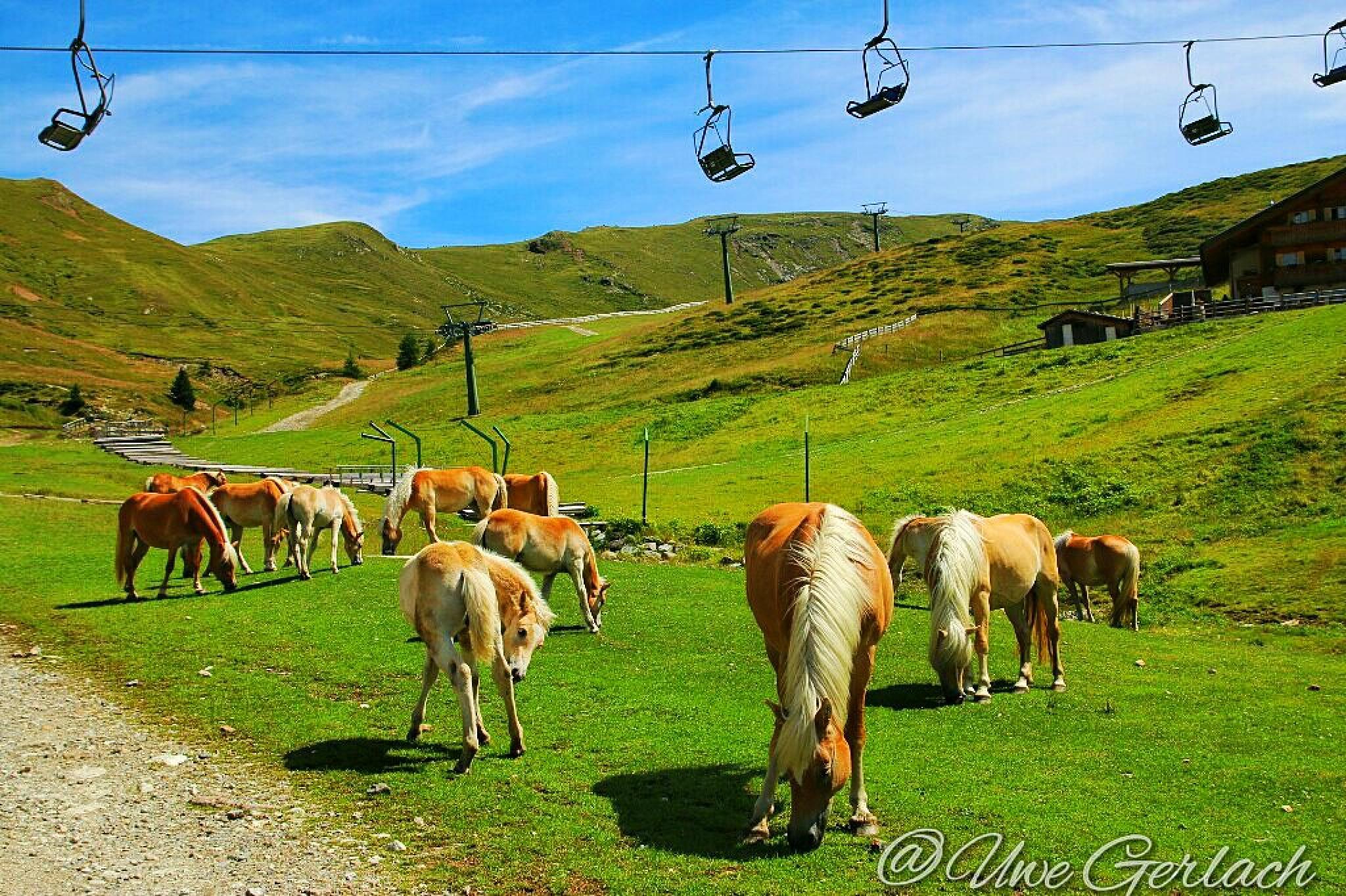 Horses by uwee2605