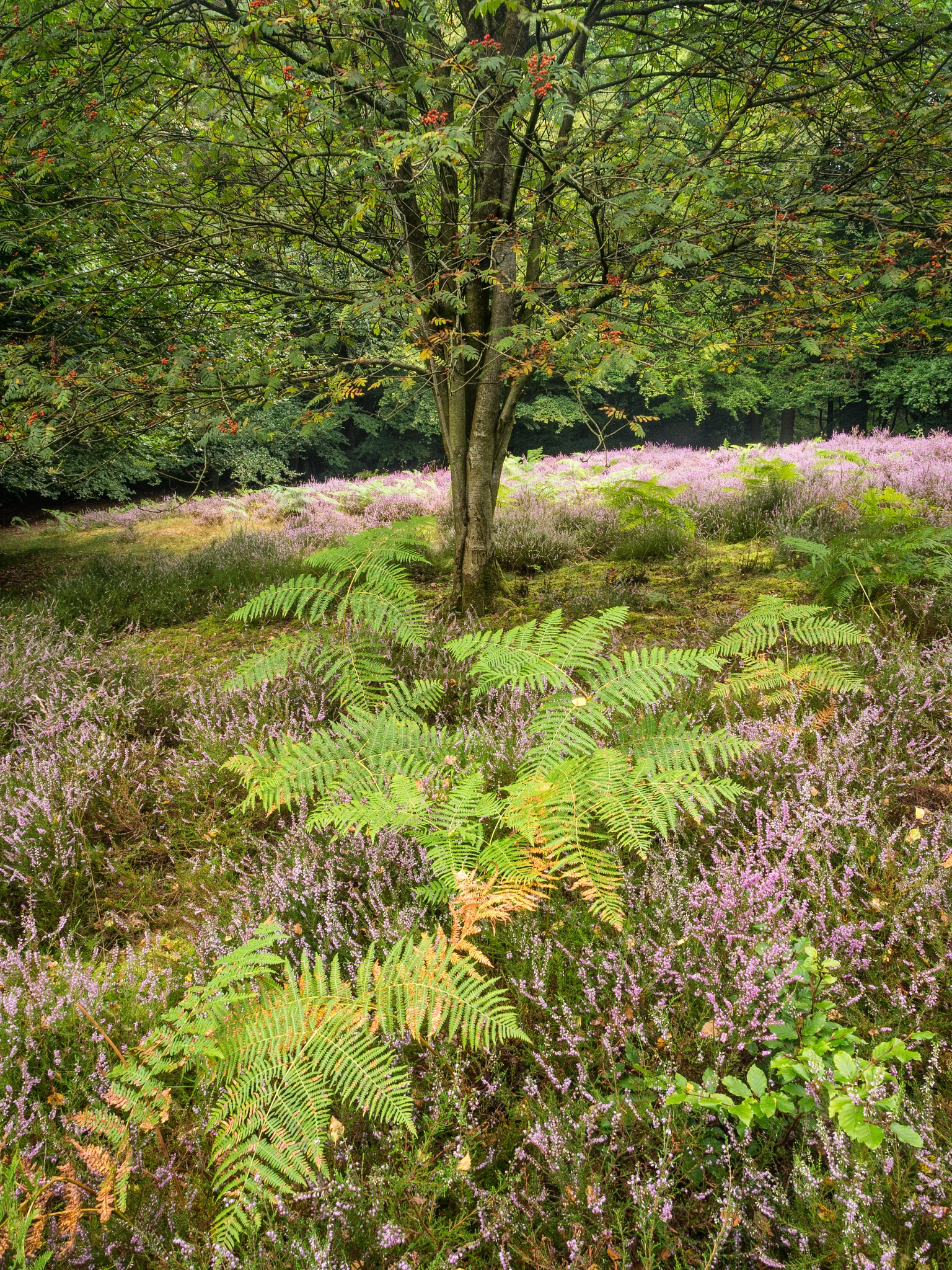 Nettlebed Common by Damian Ward