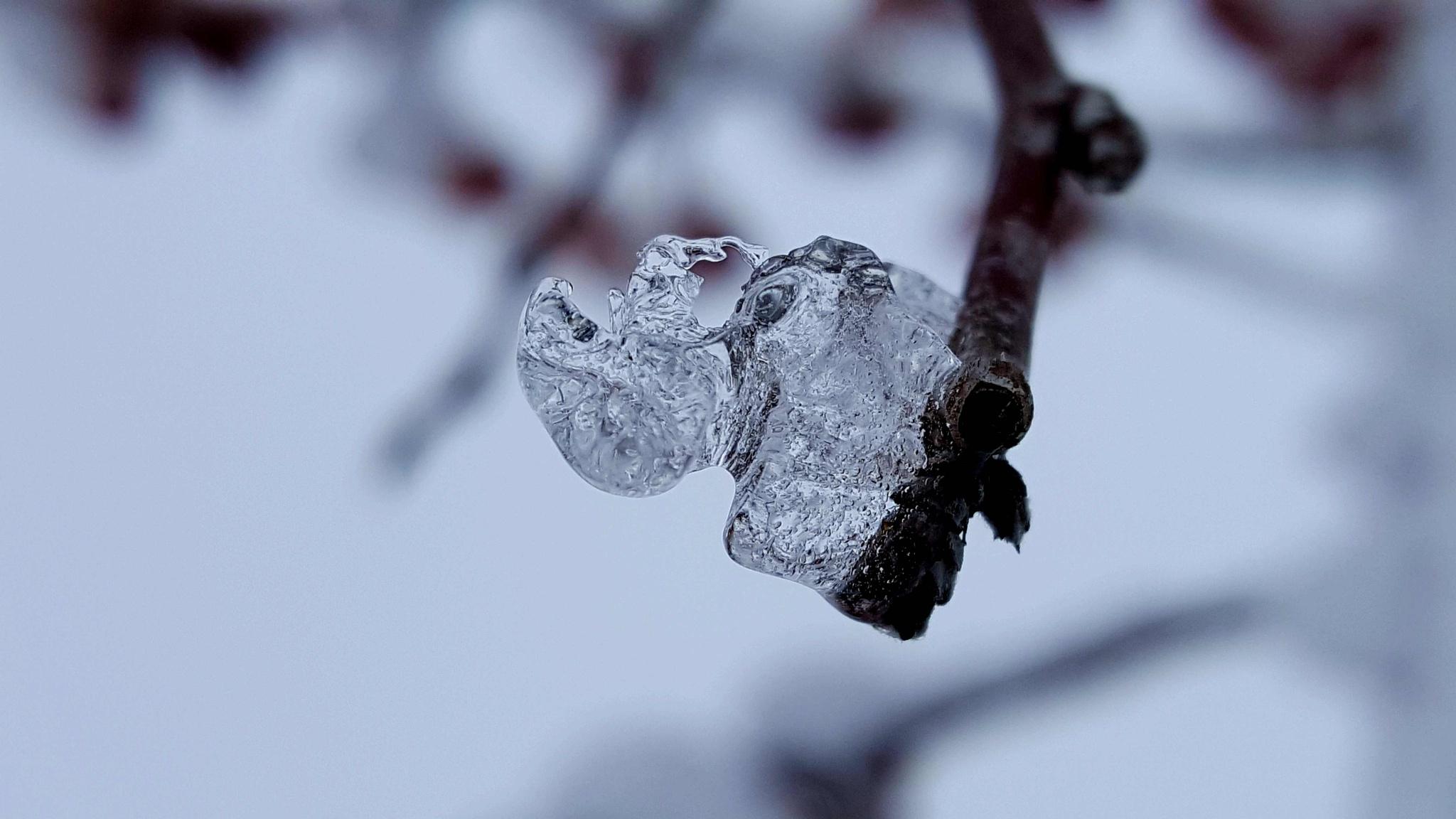 Ice by Lamar Smith
