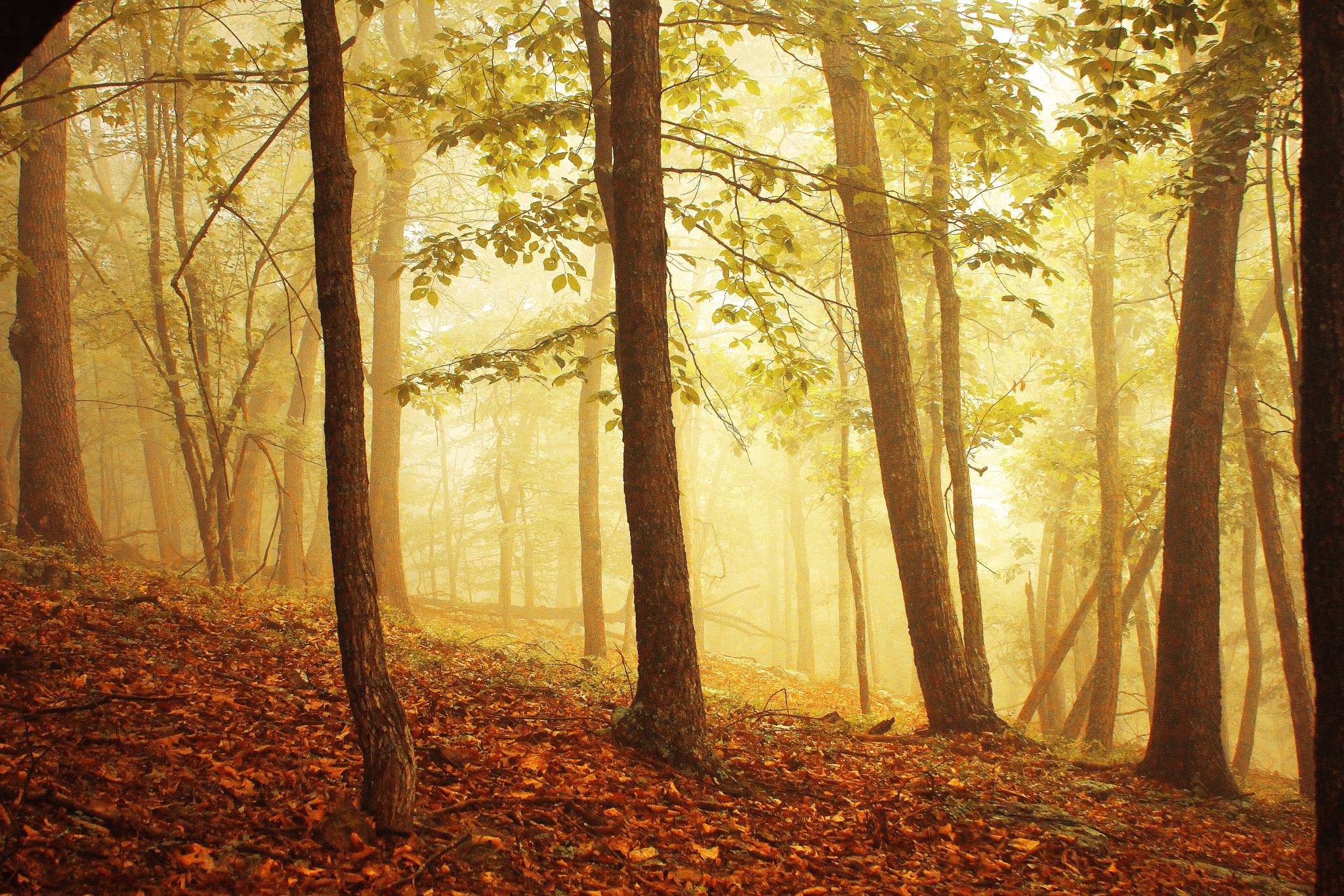 Warm Fog by Aaron Shaver