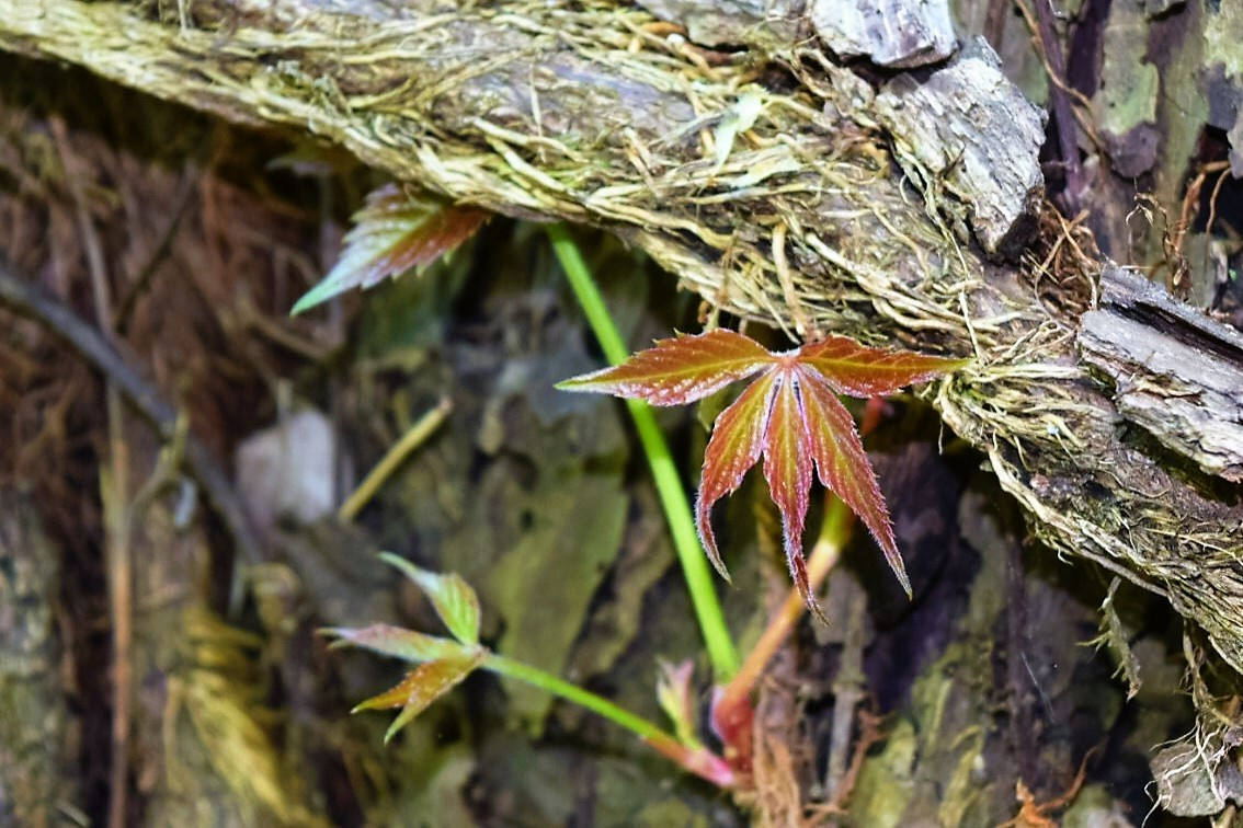 From the Dead Springs New Life by LornaWLittrell