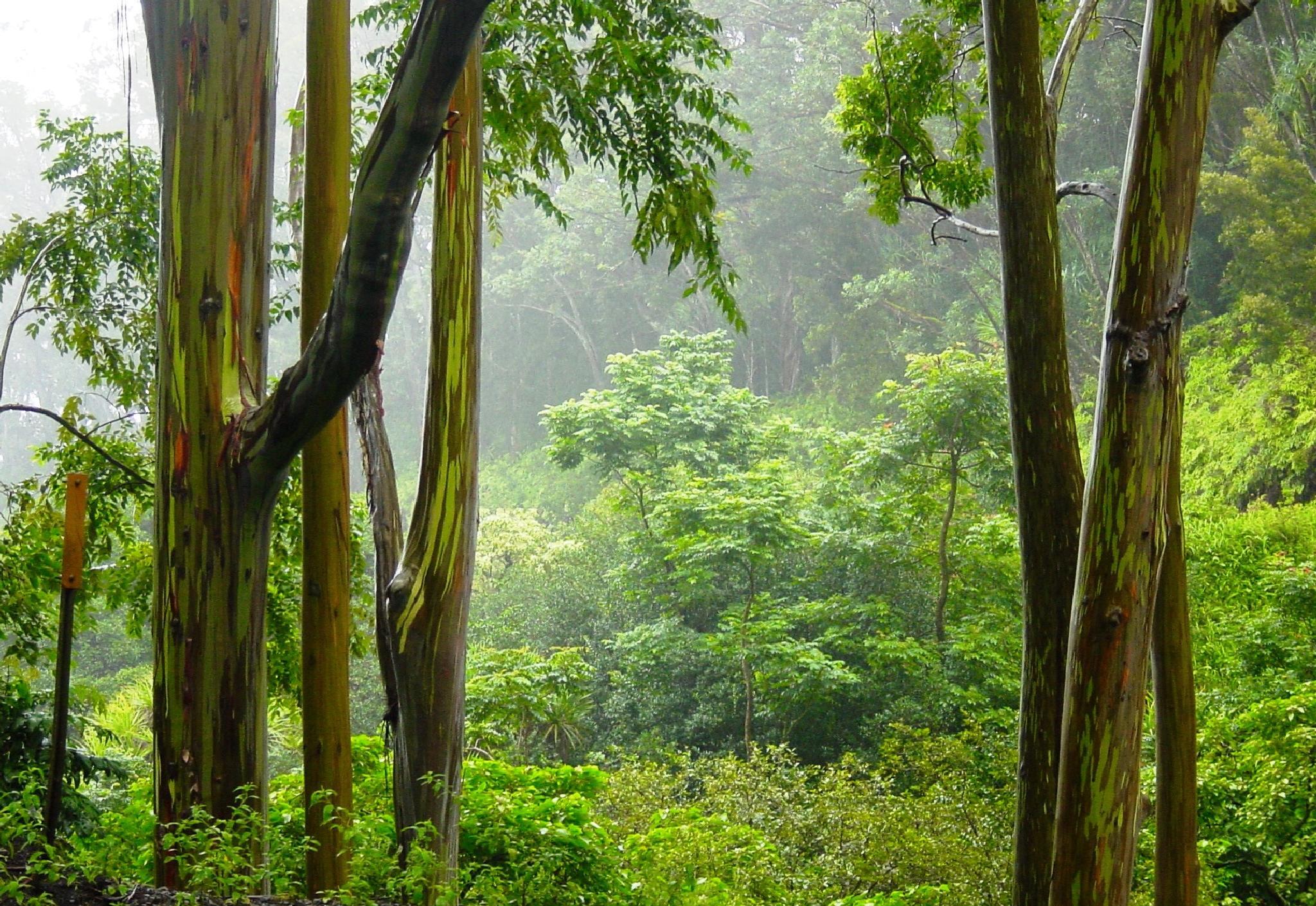 Hawaii Rain Forest by LornaWLittrell