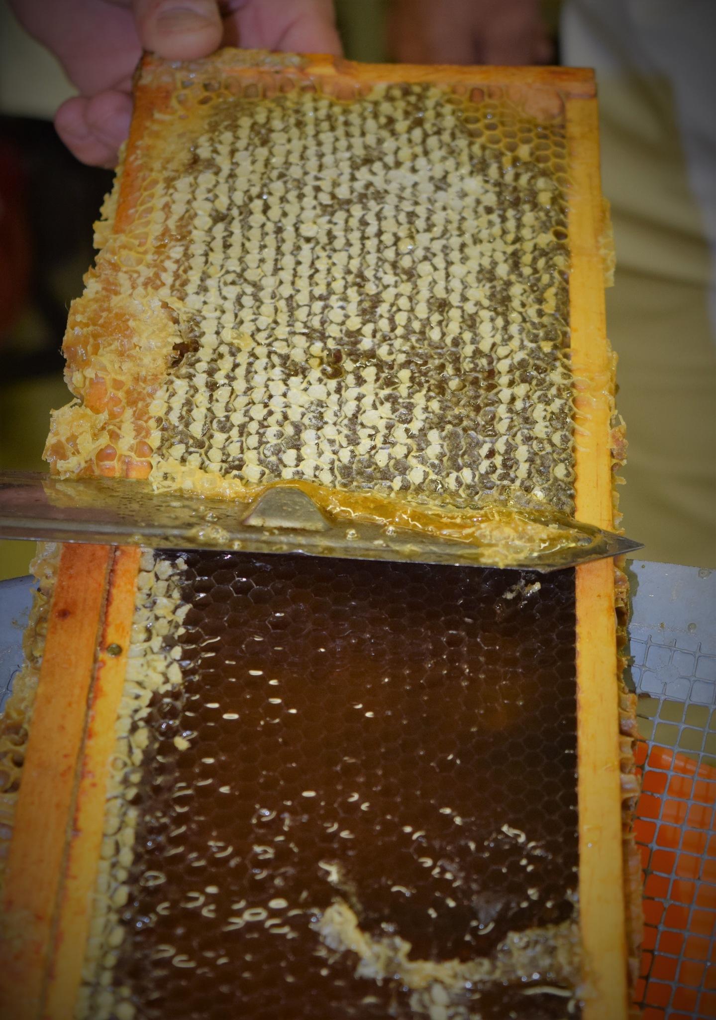 Harvesting Honey! by LornaWLittrell
