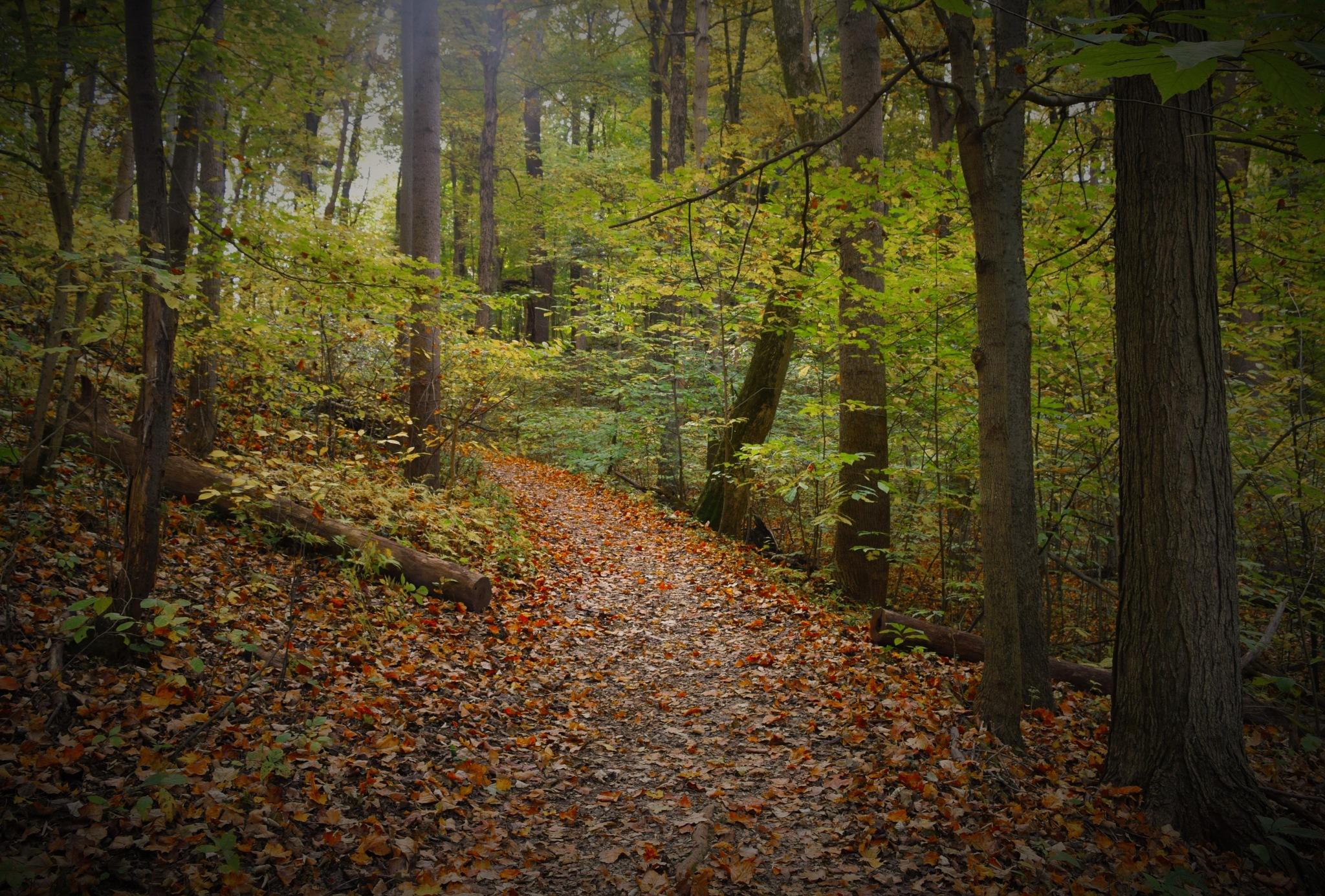 Autumn Walk by LornaWLittrell