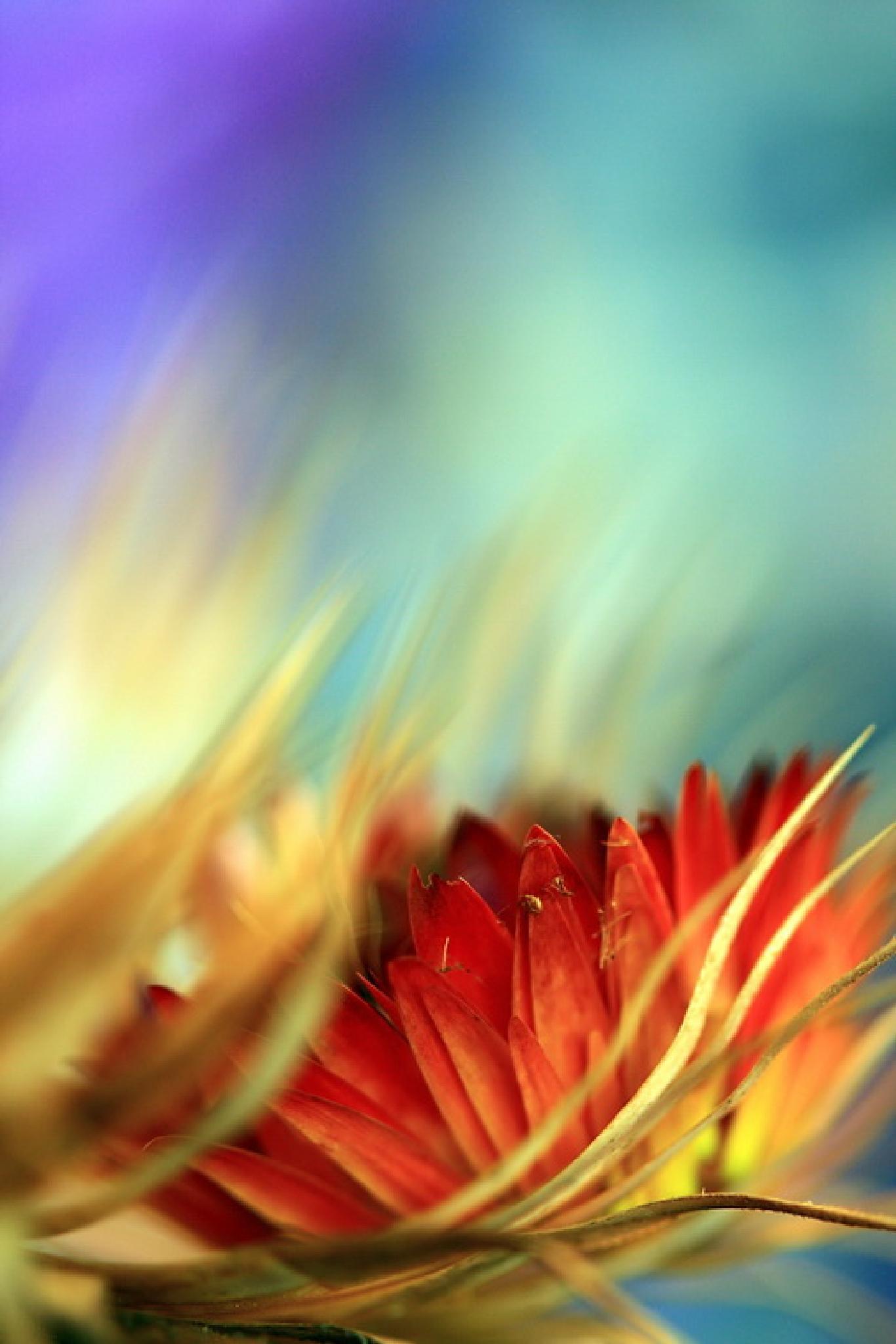 Photo in Abstract #mi̇lk thi̇stle