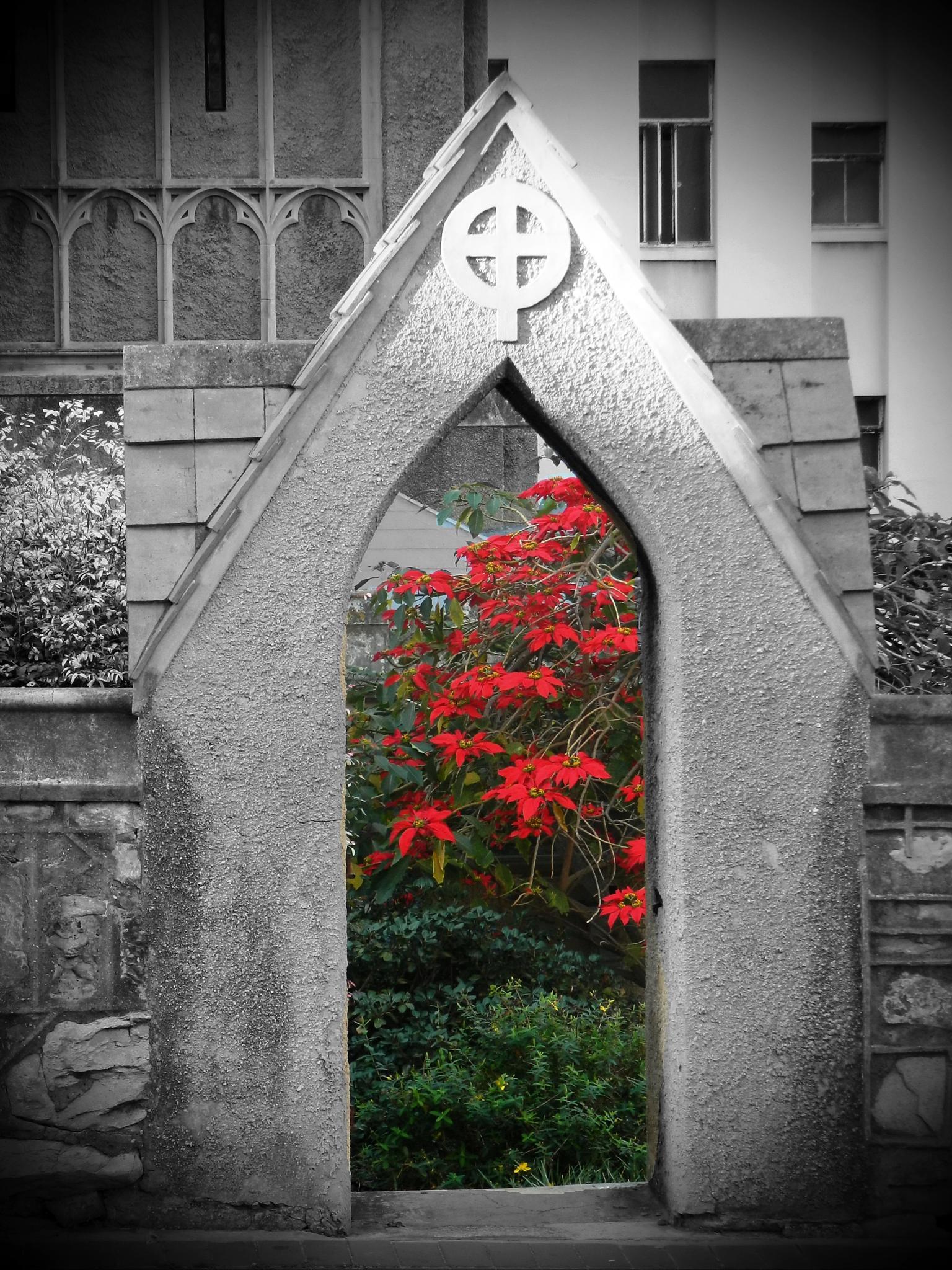 hidden garden by DeborahBooth