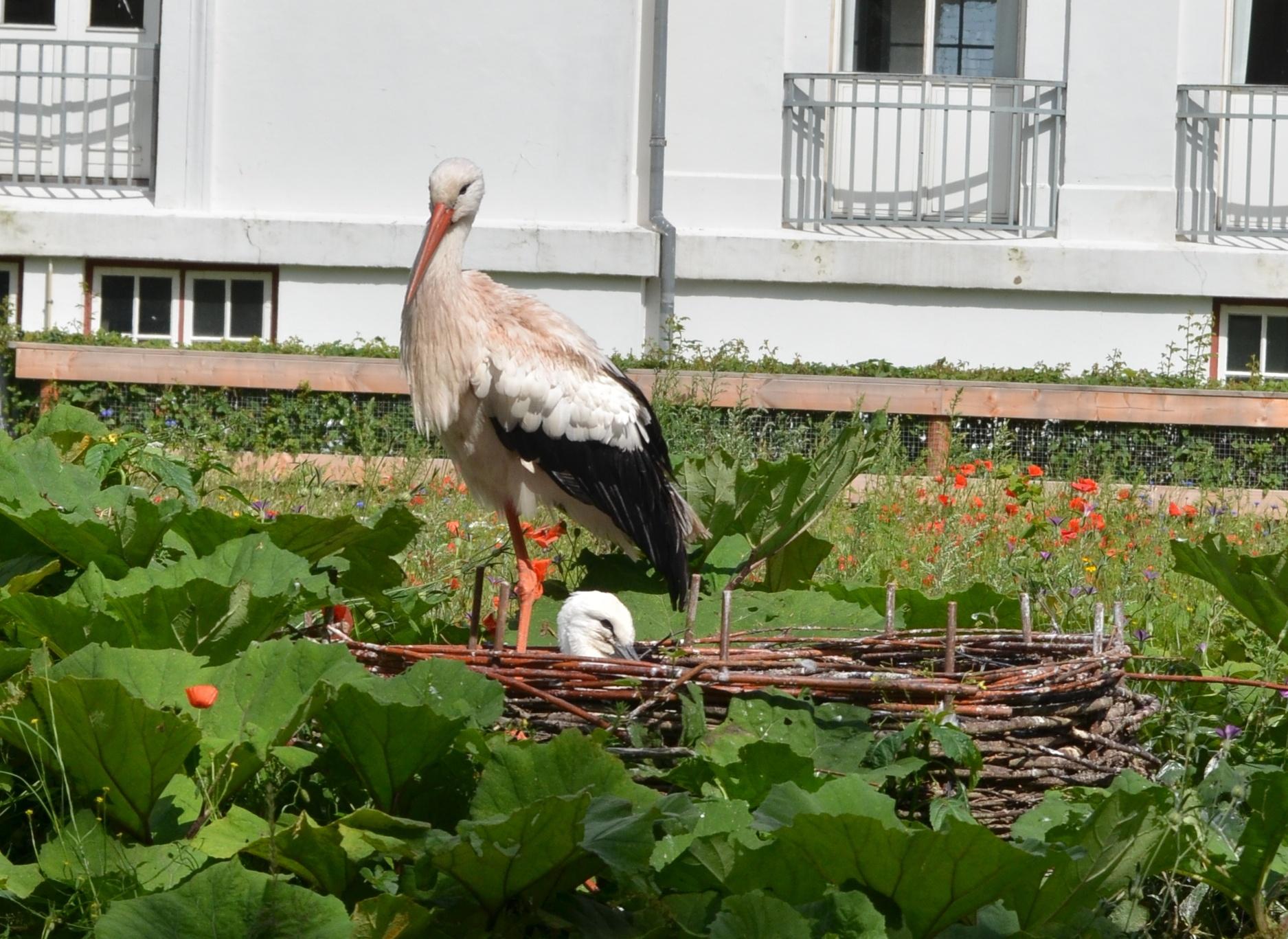 stork nest  by EsbenDK