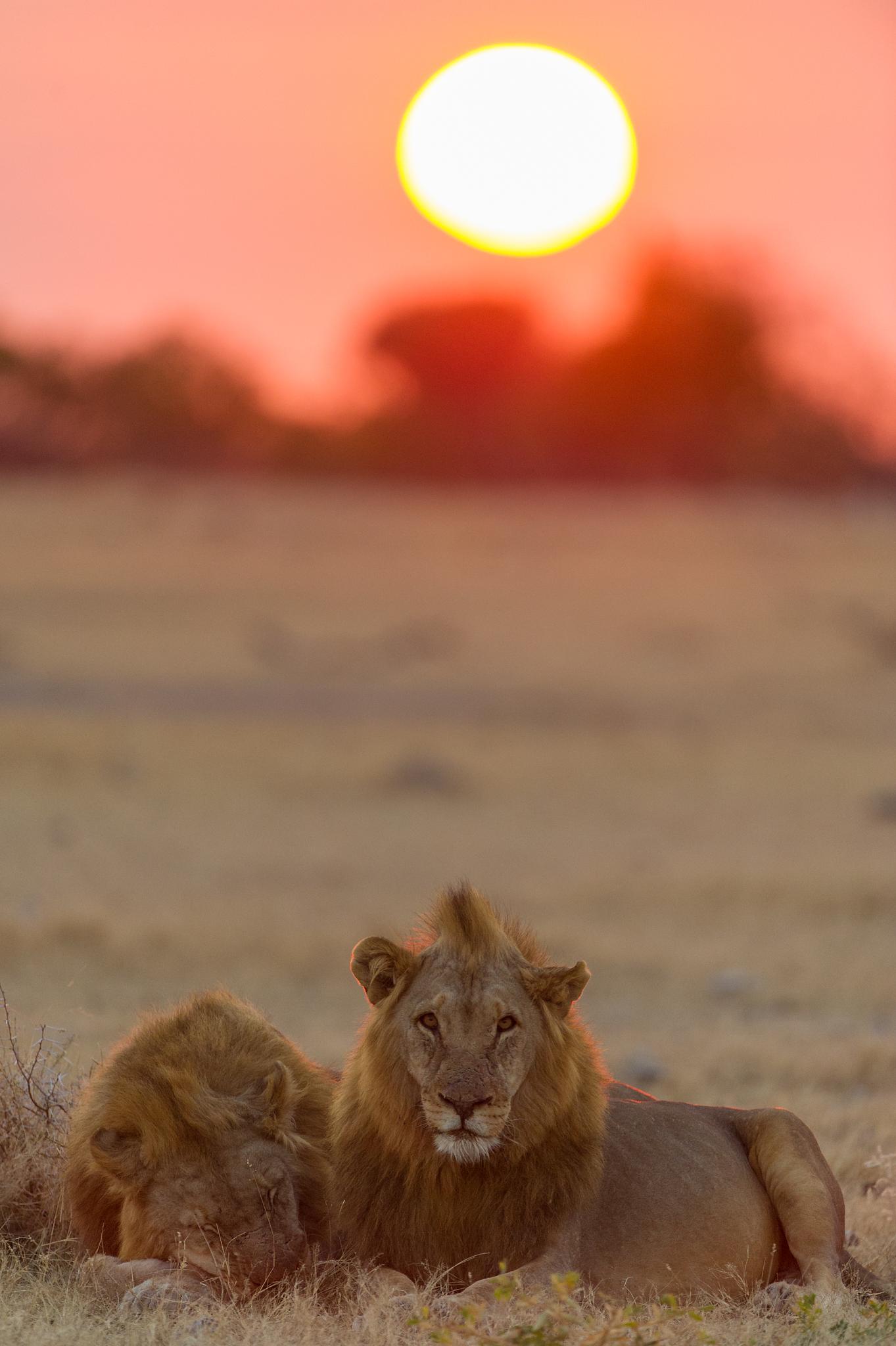 Sunrise in Etosha by Bridgena Barnard