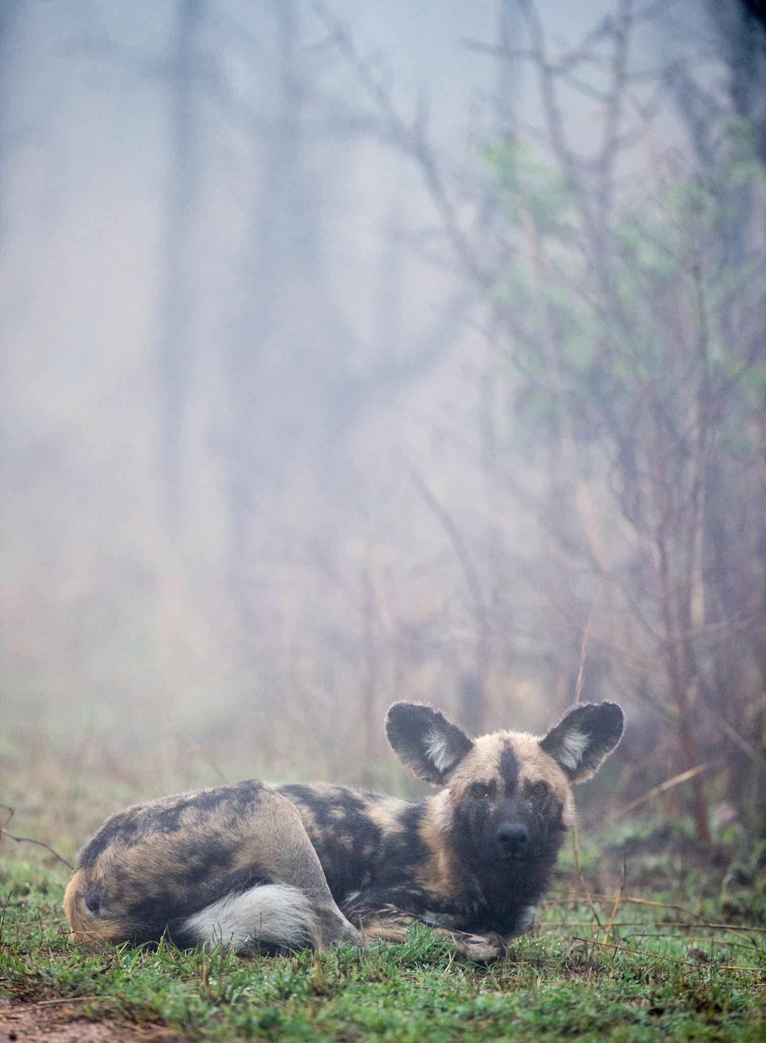 Dog in the mist by Bridgena Barnard
