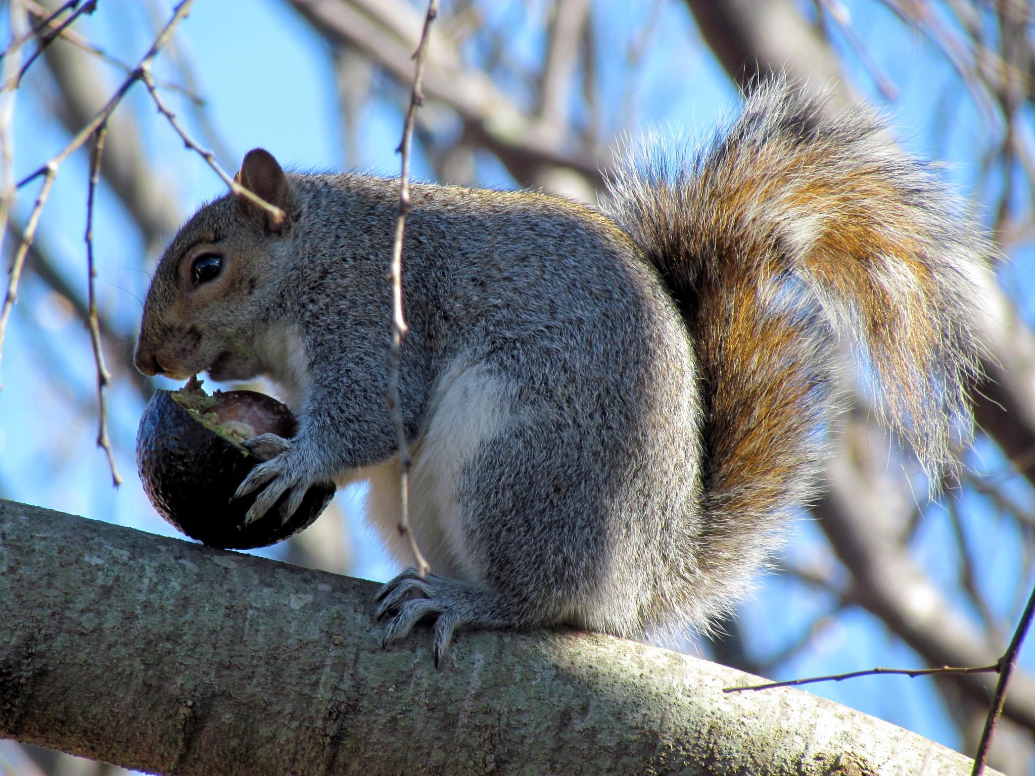 Squirrel 1 by Charmaigne Logie