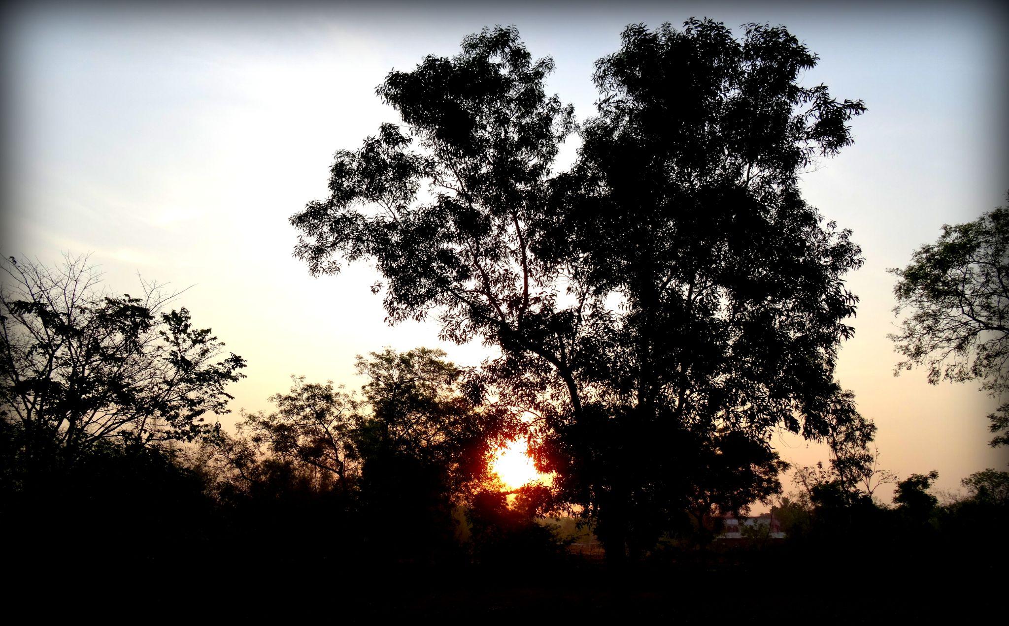 Sunrise by saharajib