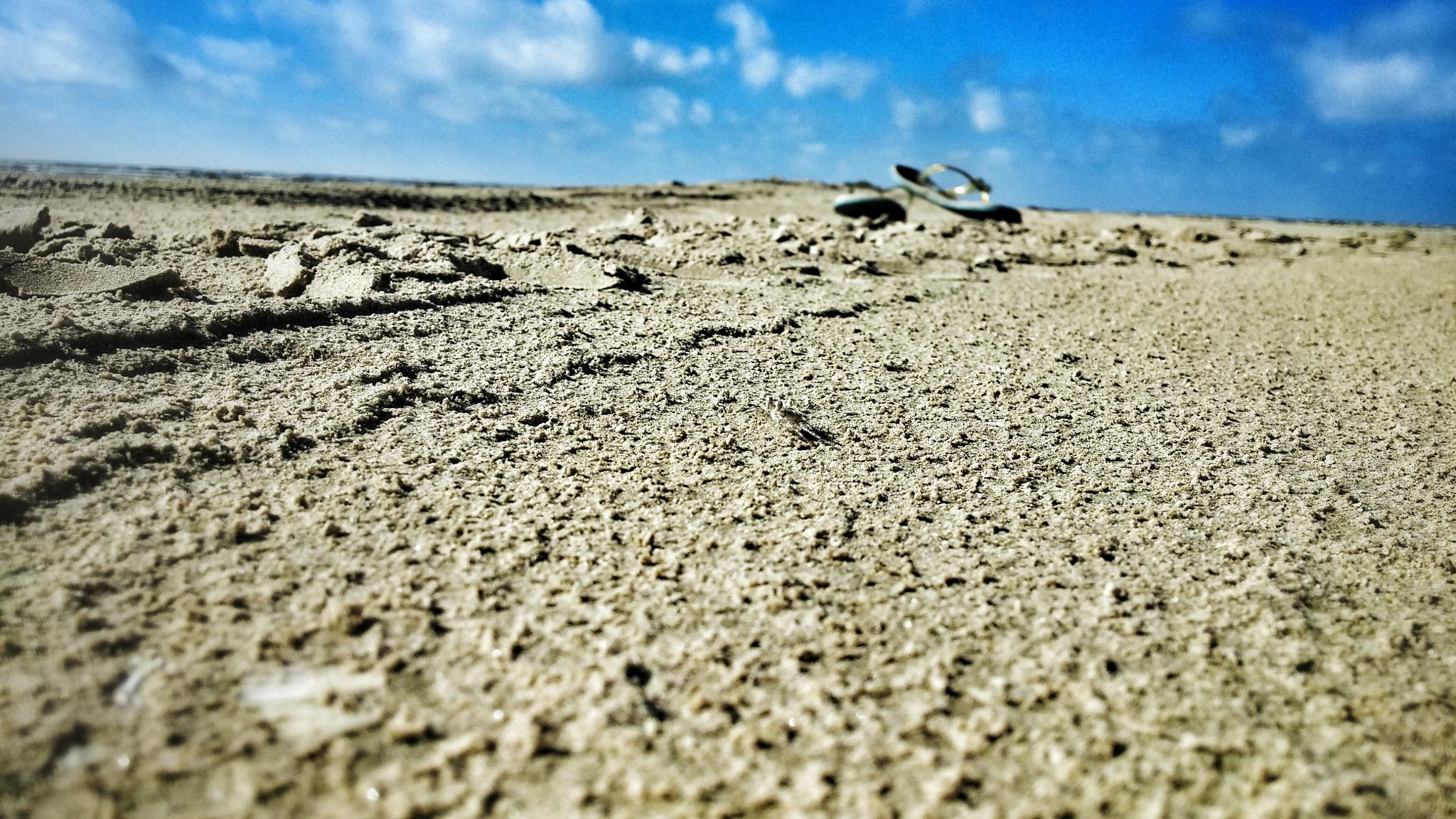 Sandy beach crab by ForeverMoreByAshley