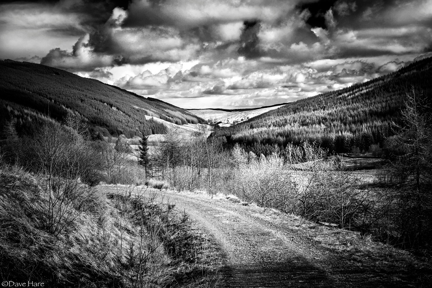Woodland Valley by davehare