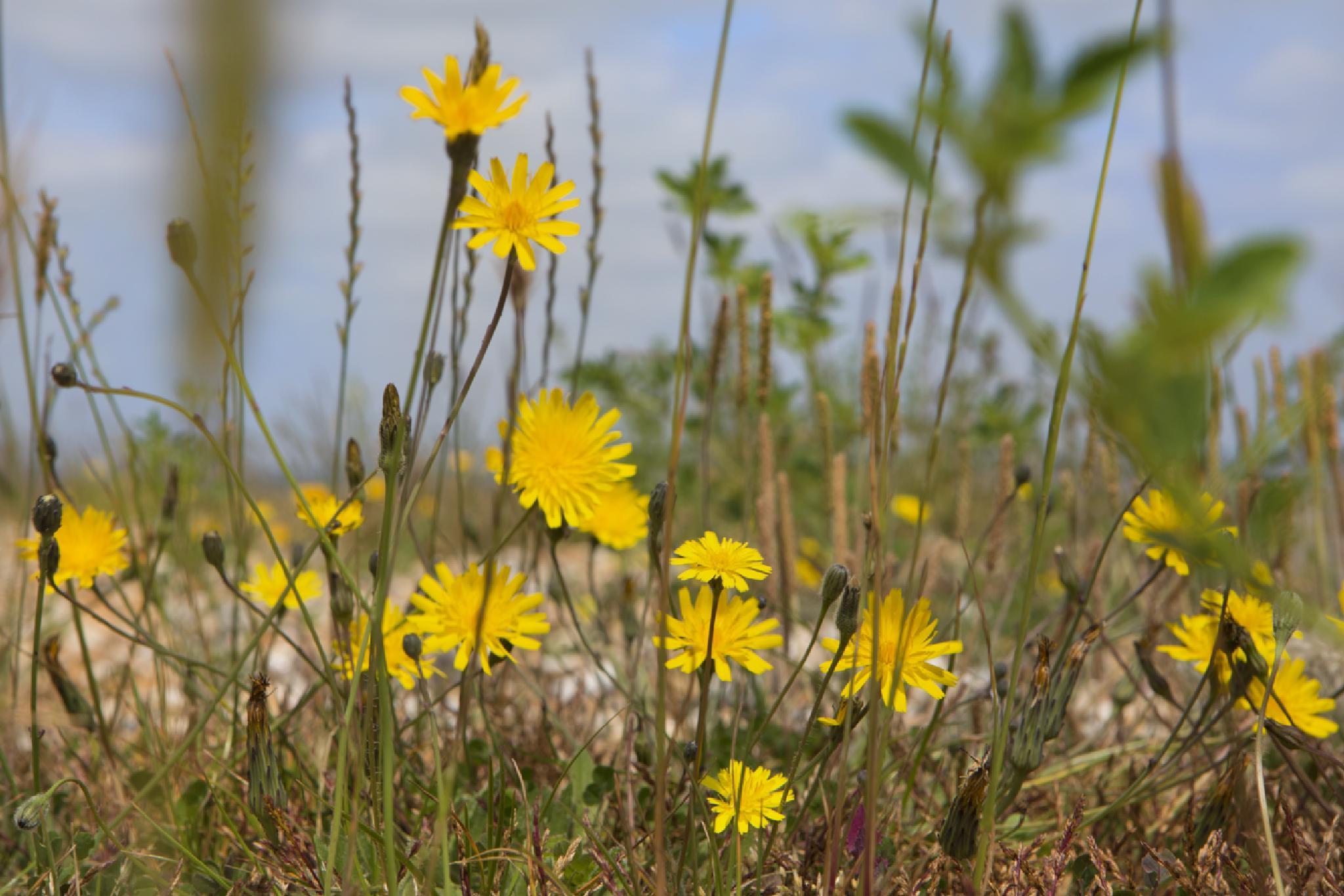 Seaside flora by davehare