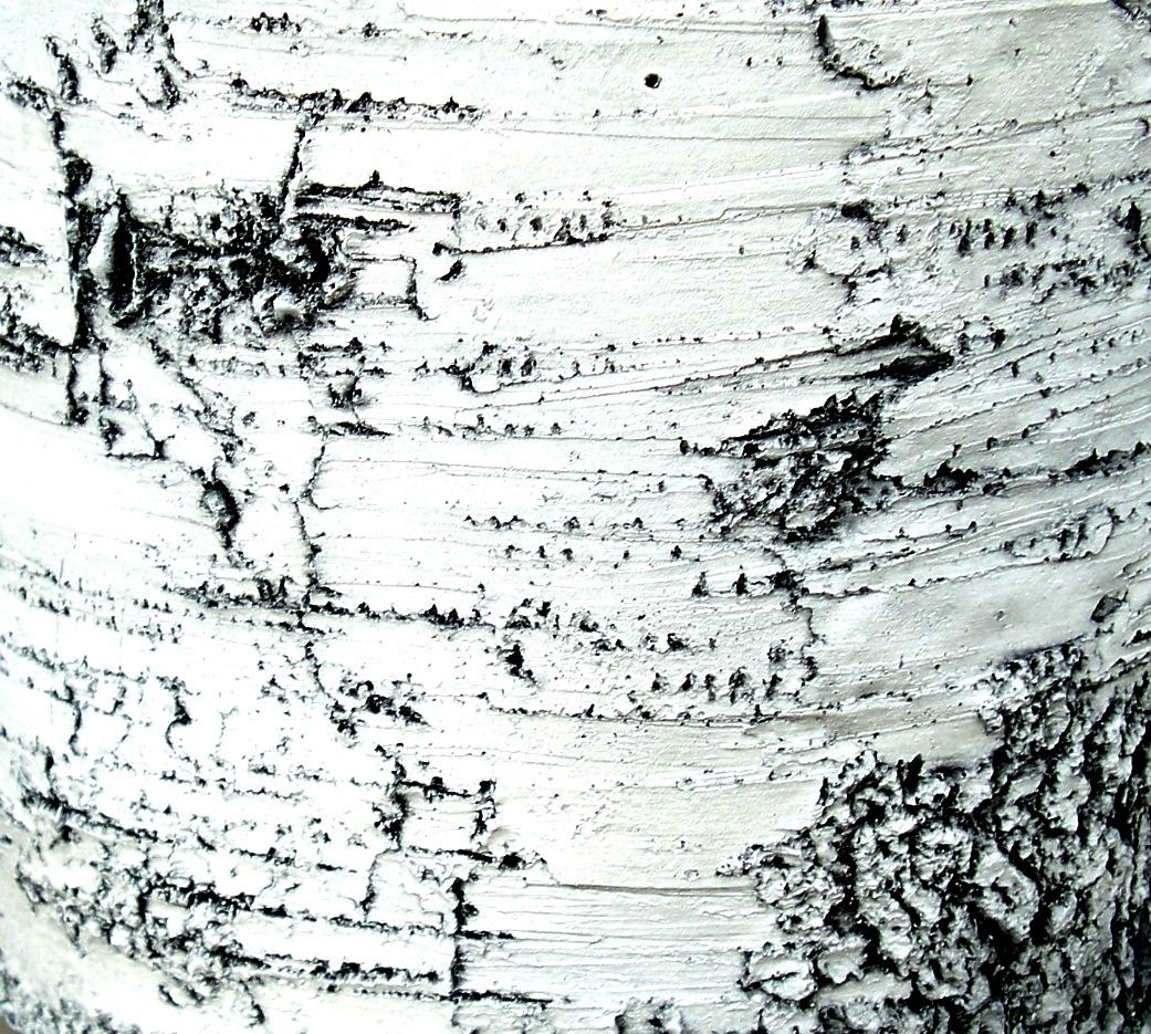 Beautiful Birch 1 by RMCROC