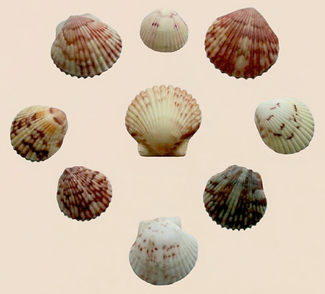 Seashells 1 by RMCROC