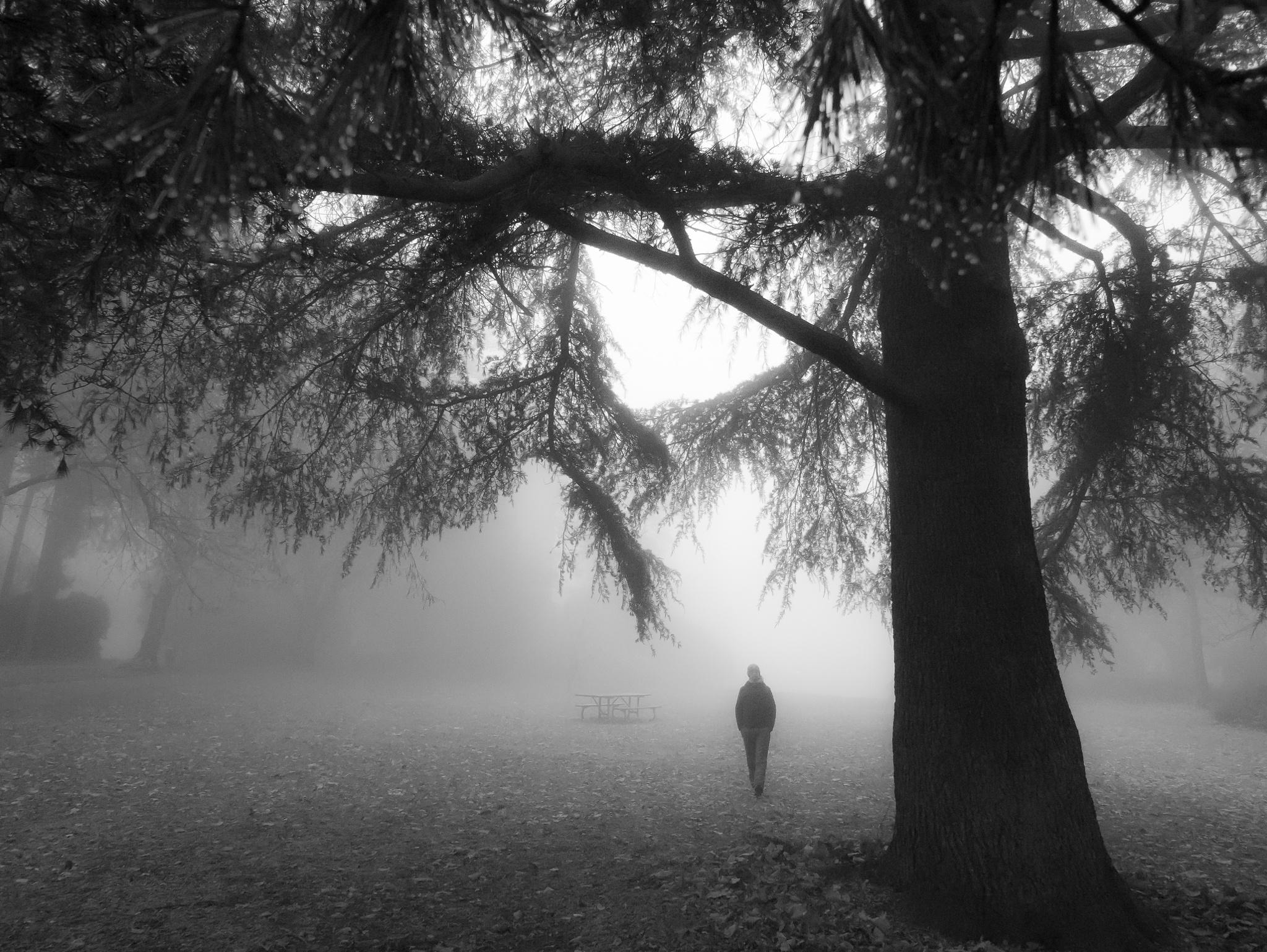 Foggy morning by Karolina Trapp