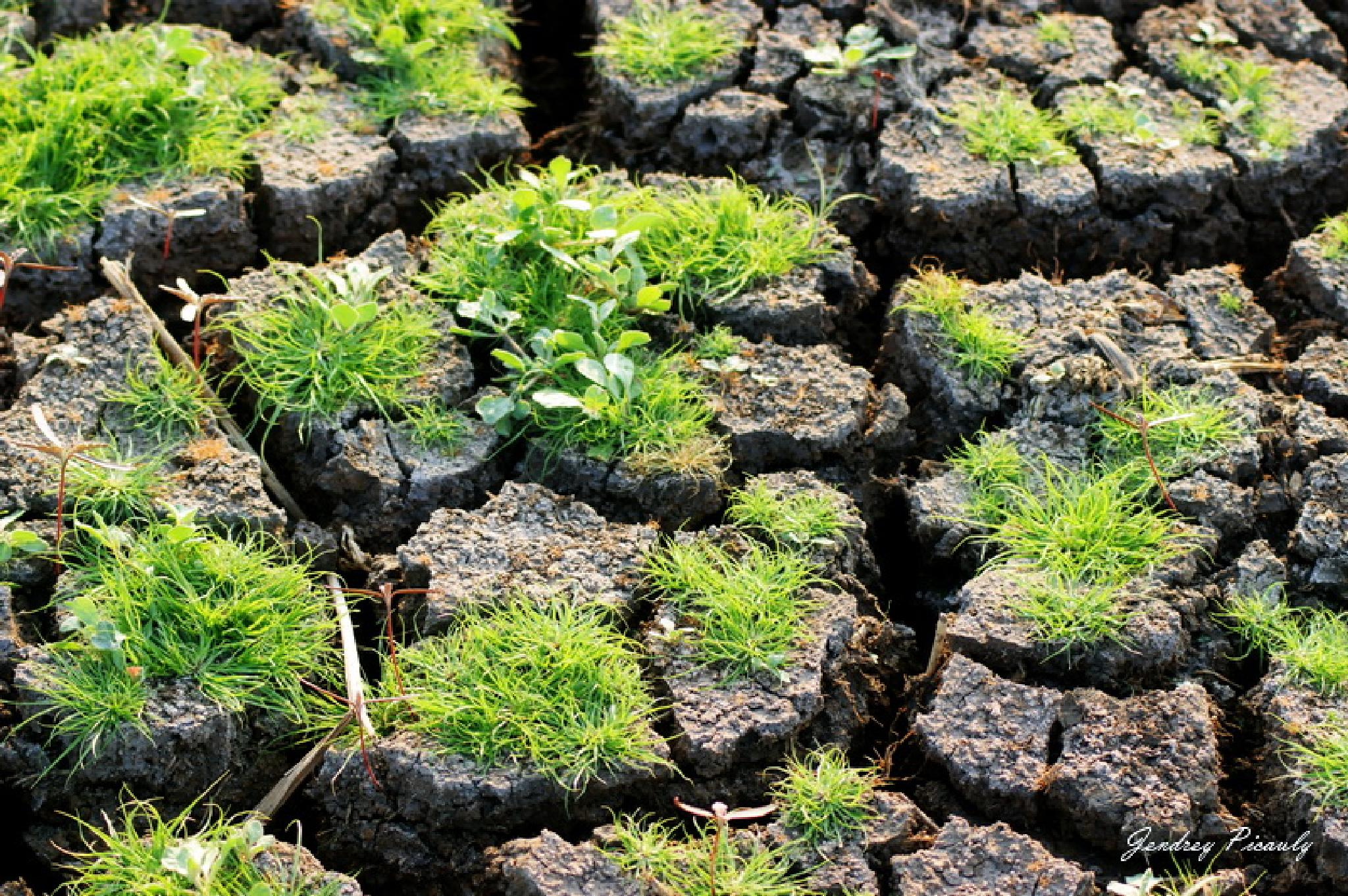 Dry soil but give life by Jendrey