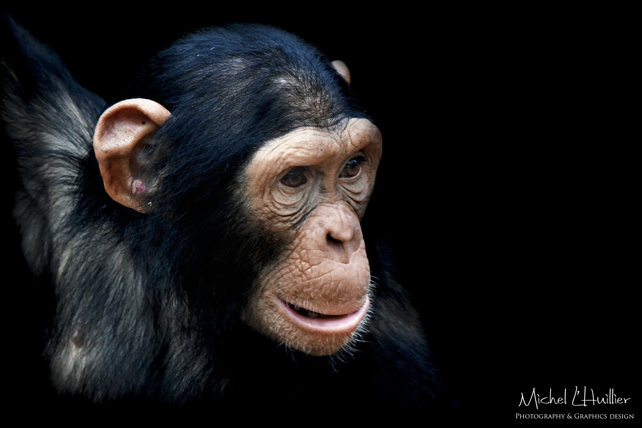 Young chimp by Asterix93
