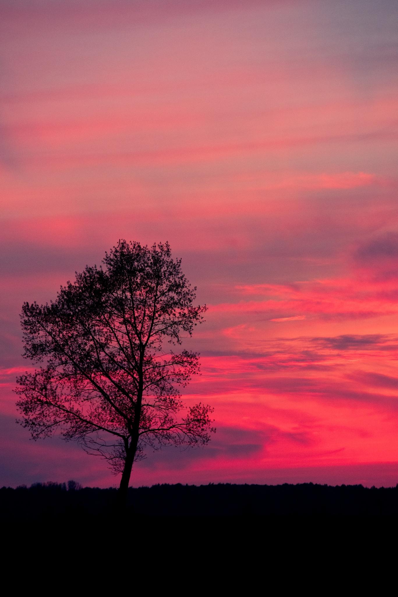 Pink sunset by Projektfoto