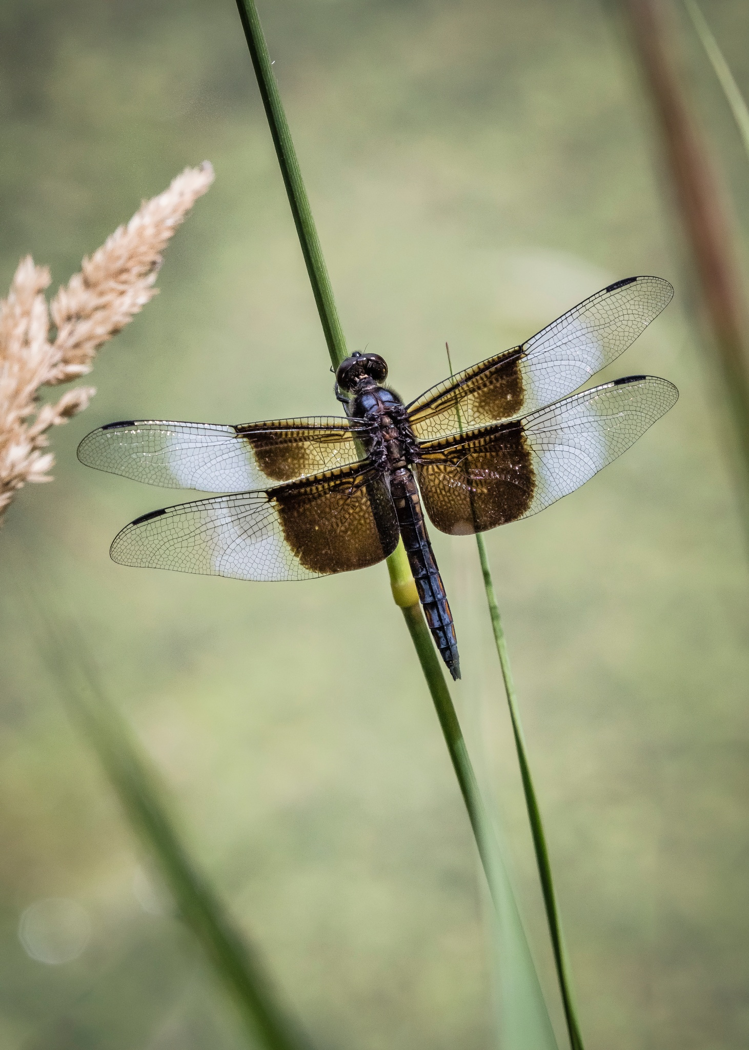 Resting Dragonfly  by MaryBethMenden