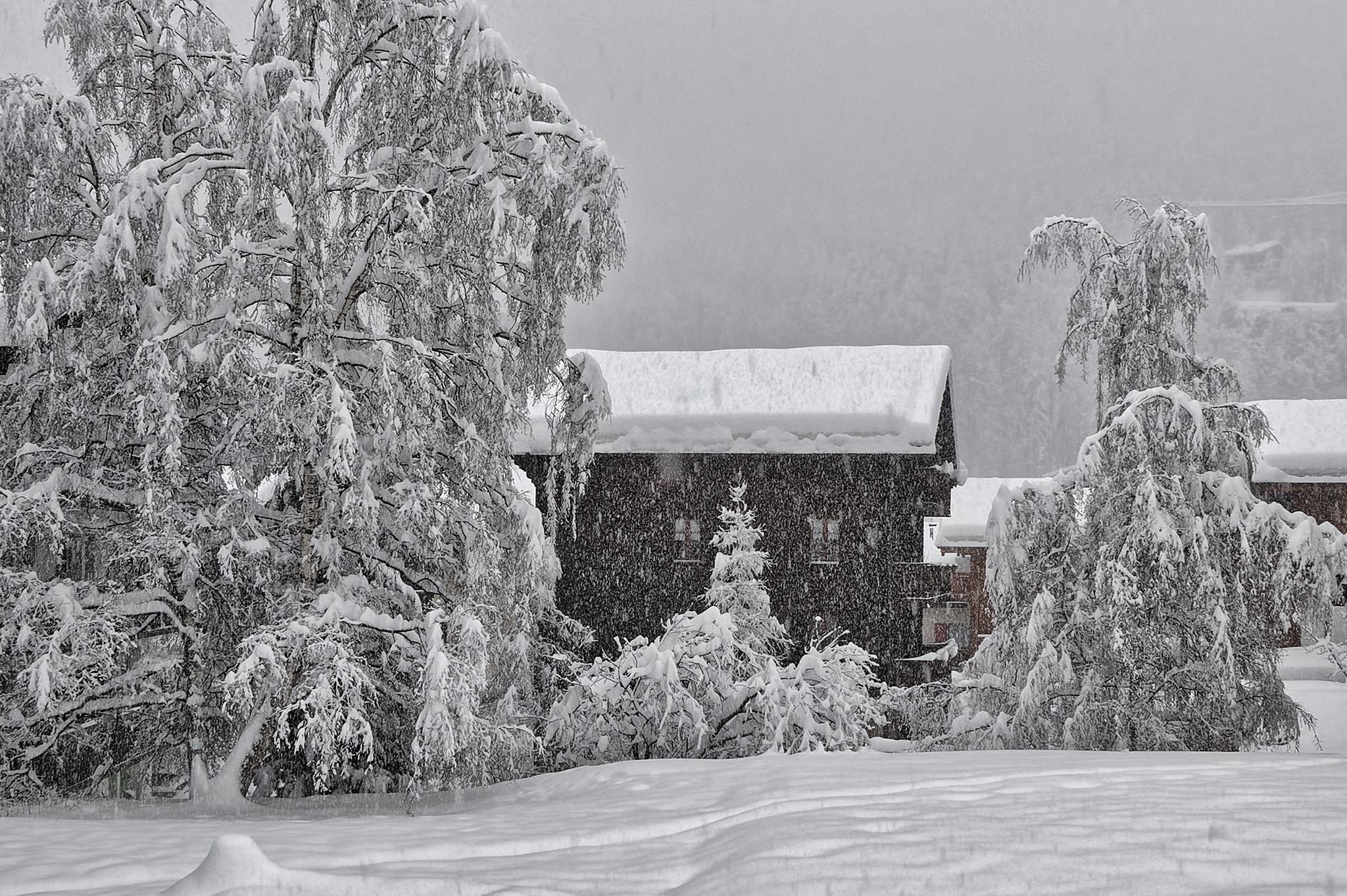 Real Winter by Herbert Stachelberger