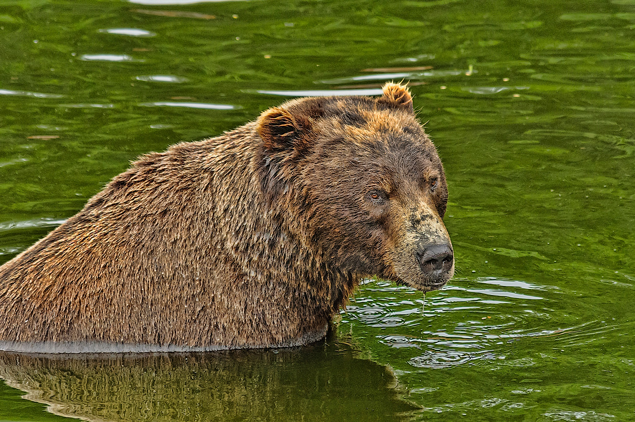 Cooling Off by Herbert Stachelberger