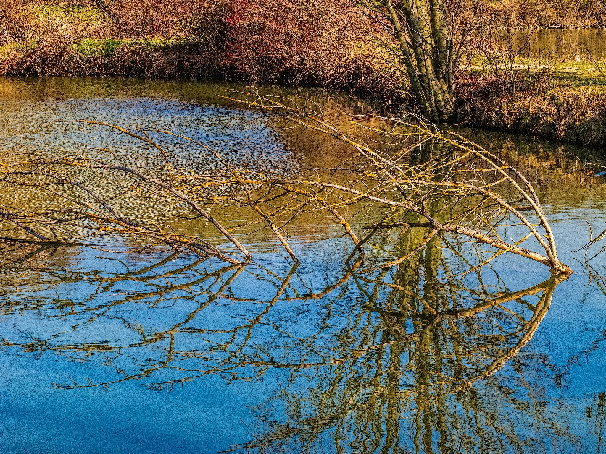 Fall Reflection by Herbert Stachelberger