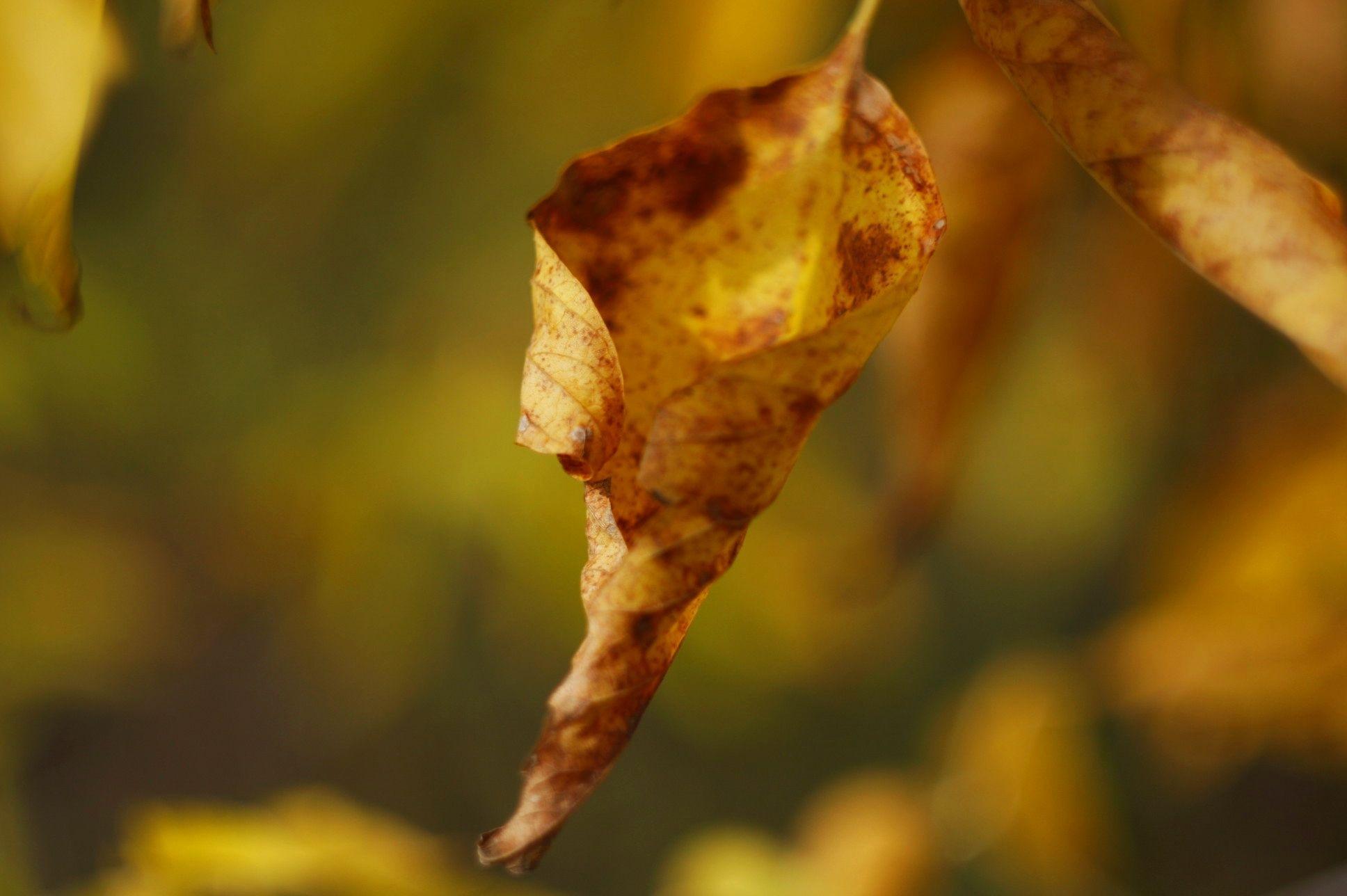 sign of autumn by Robert Jurczyk