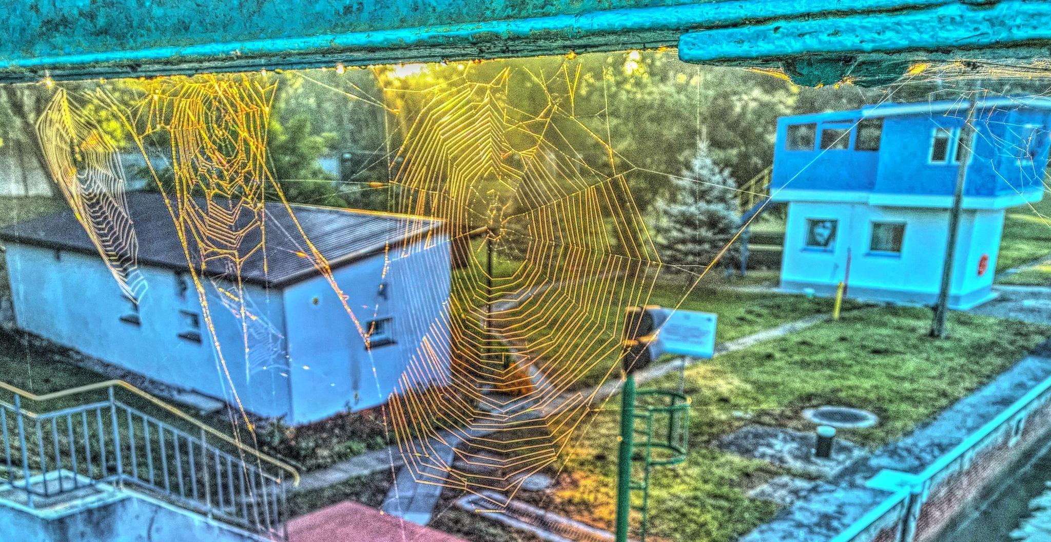 spider webs  by Robert Jurczyk