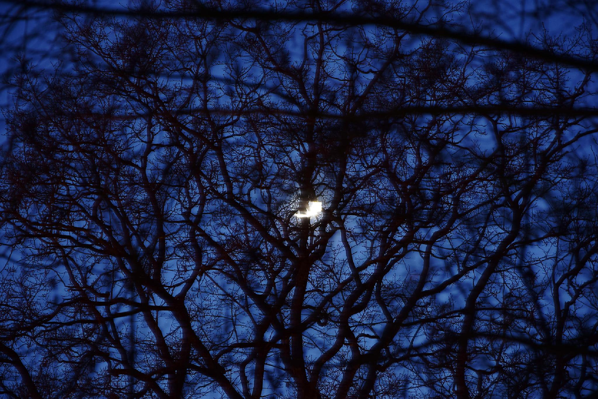 lune derriere les branches by Micka Lefeuvre