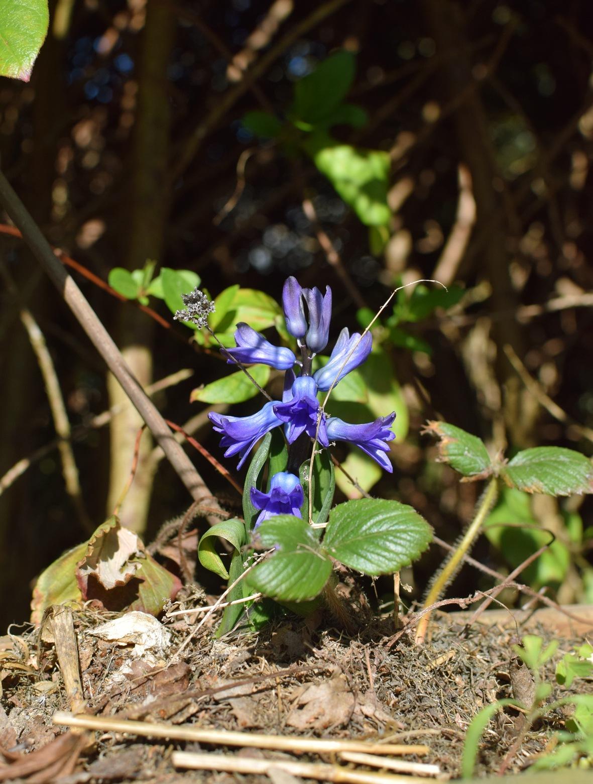 fleur bleu by Micka Lefeuvre