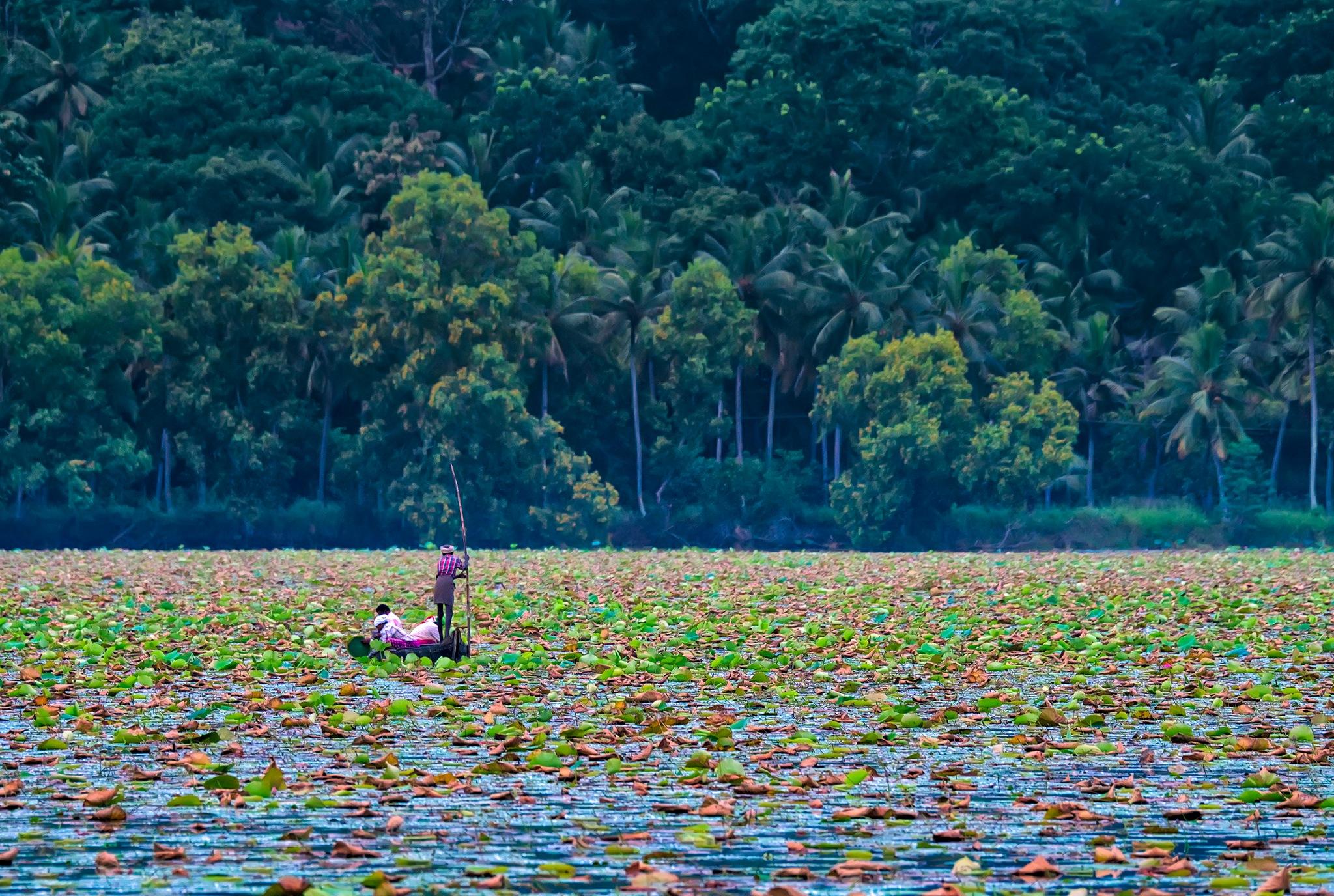 Landscape  by sajan k s