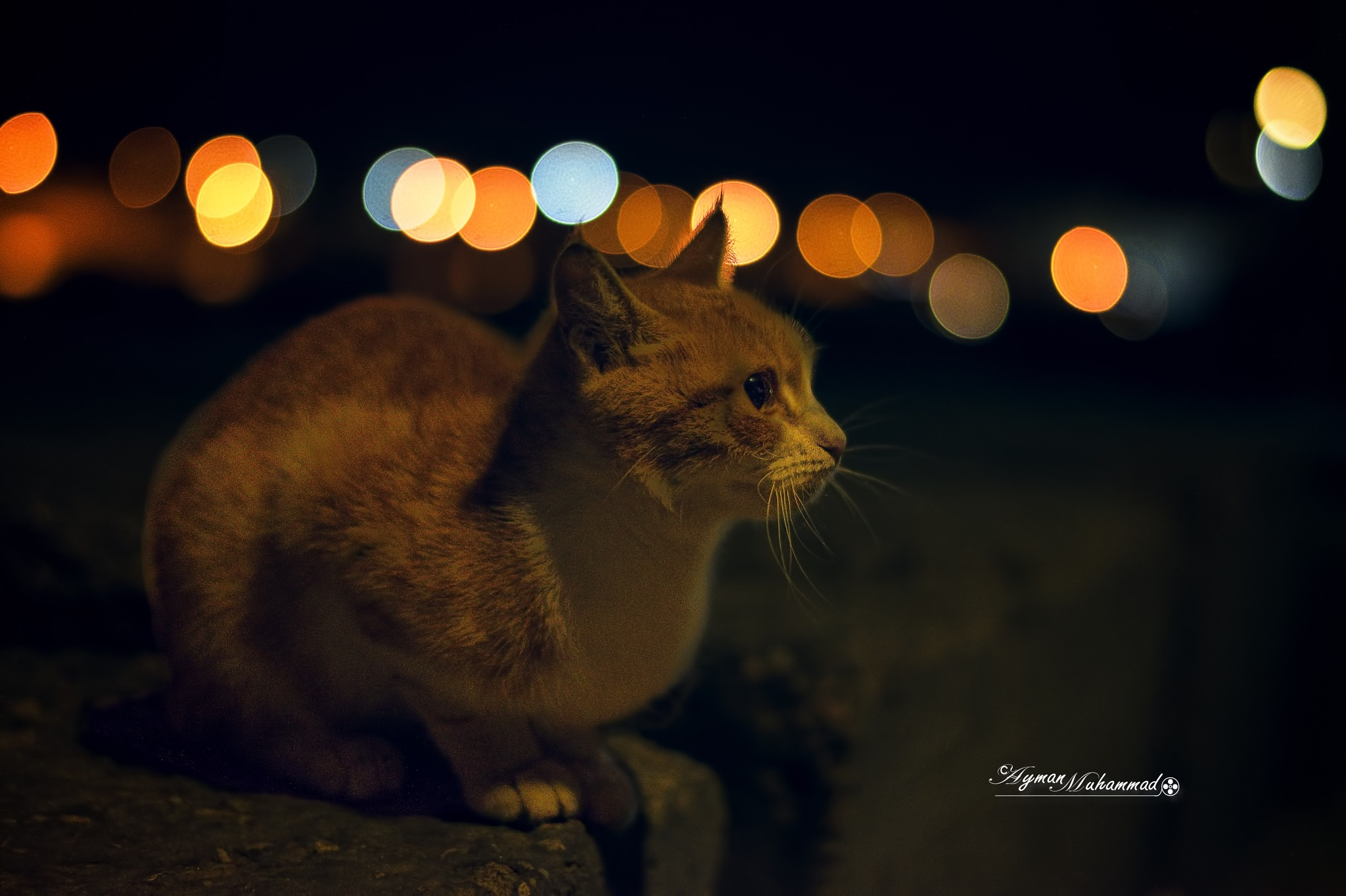 Cute Seaside Kitty at night by AymanMuhammad