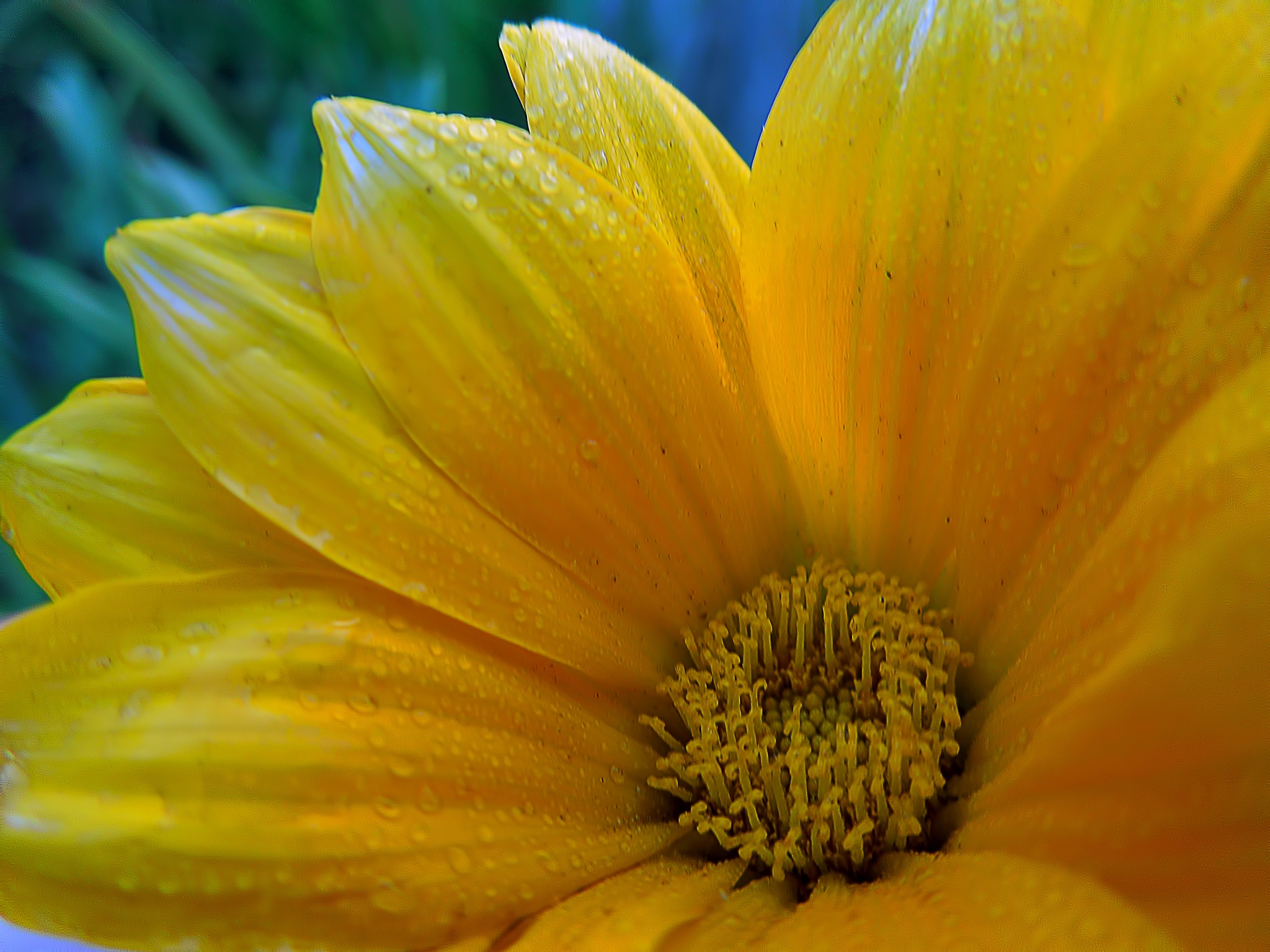 A closer look at the flower by AymanMuhammad