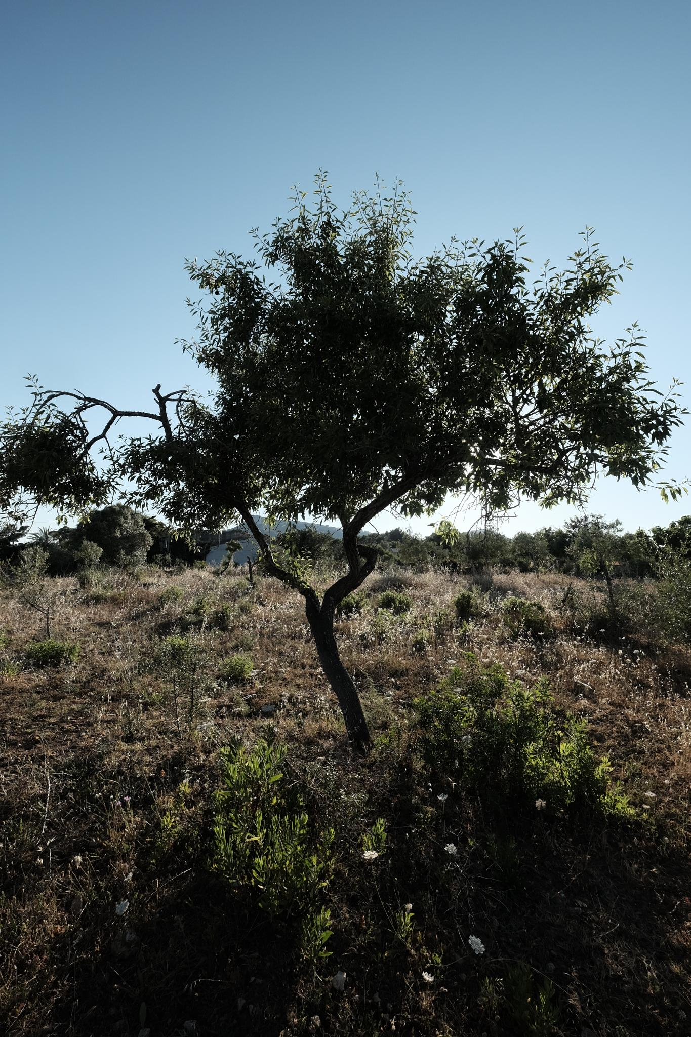 mallorca farmland by Michael Axt
