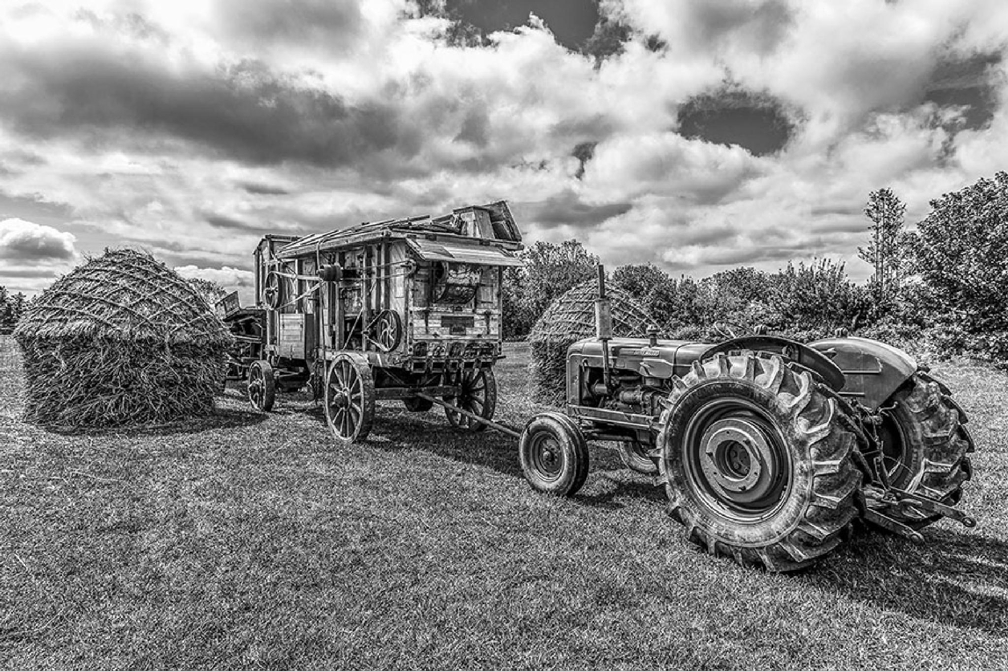 Harvesting by Jim Hamilton