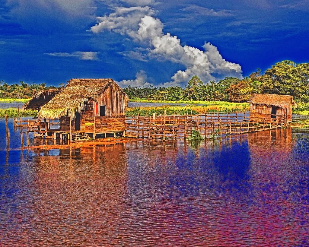 Amazon Farm by Jack Harwick