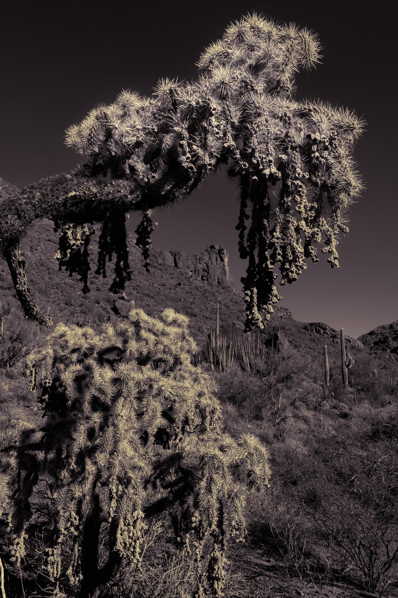 """Desert """"grape vine"""" by John Mark Jennings"""