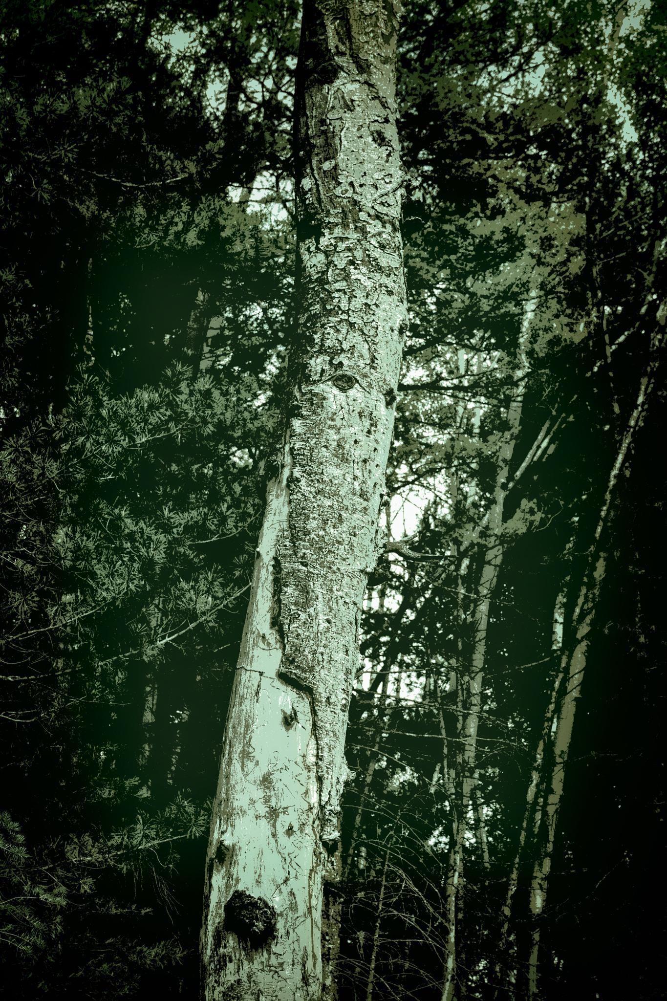 Maimed in the Forest by John Mark Jennings