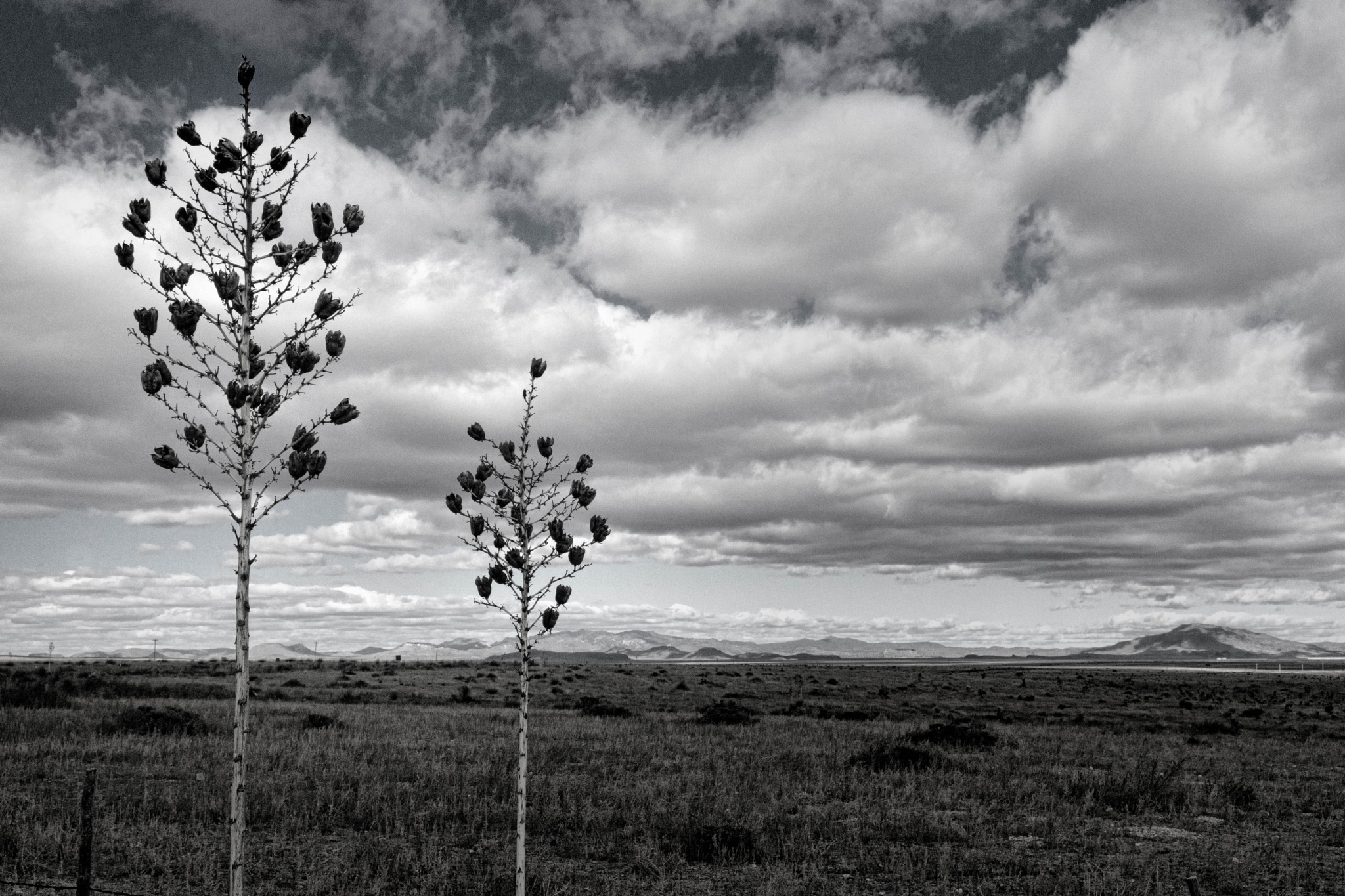 December on The Marfa Plateau by John Mark Jennings