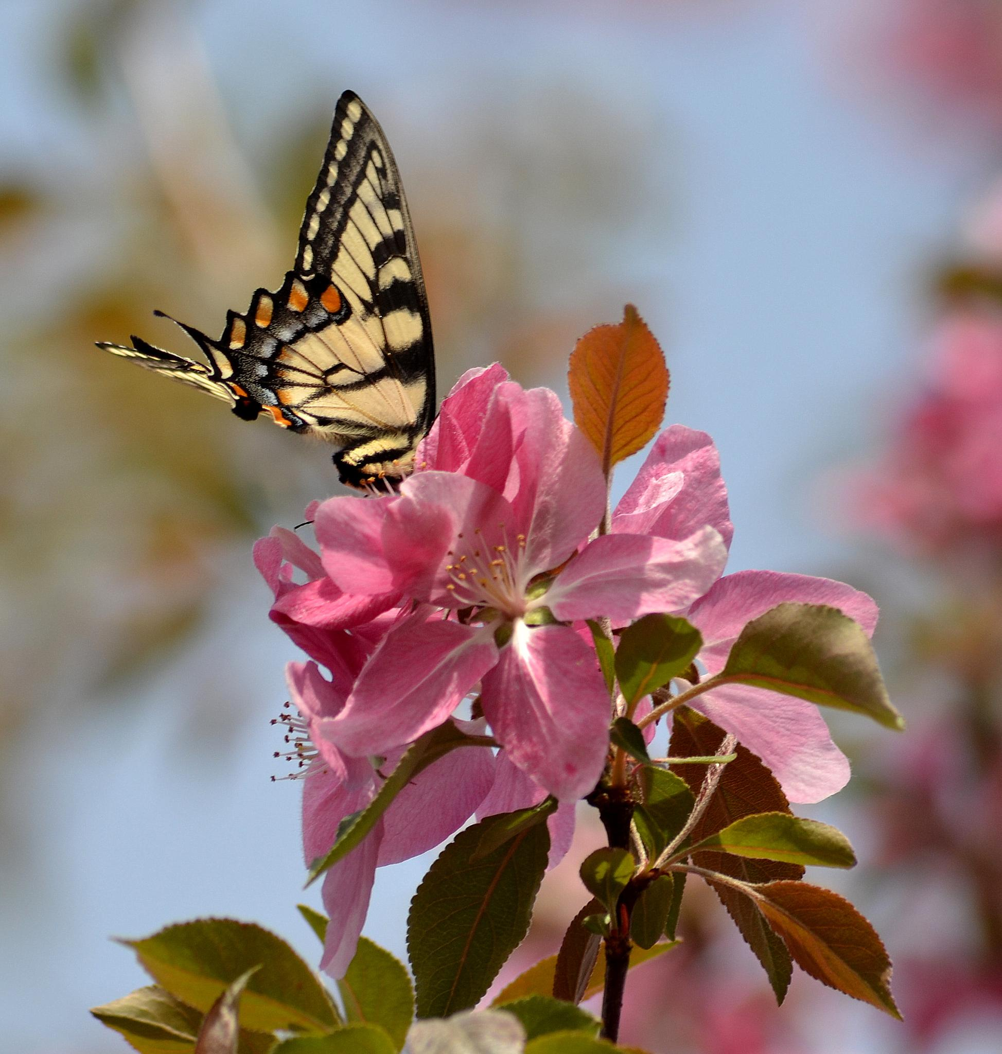 Photo in Nature #butterfly #nature #spring